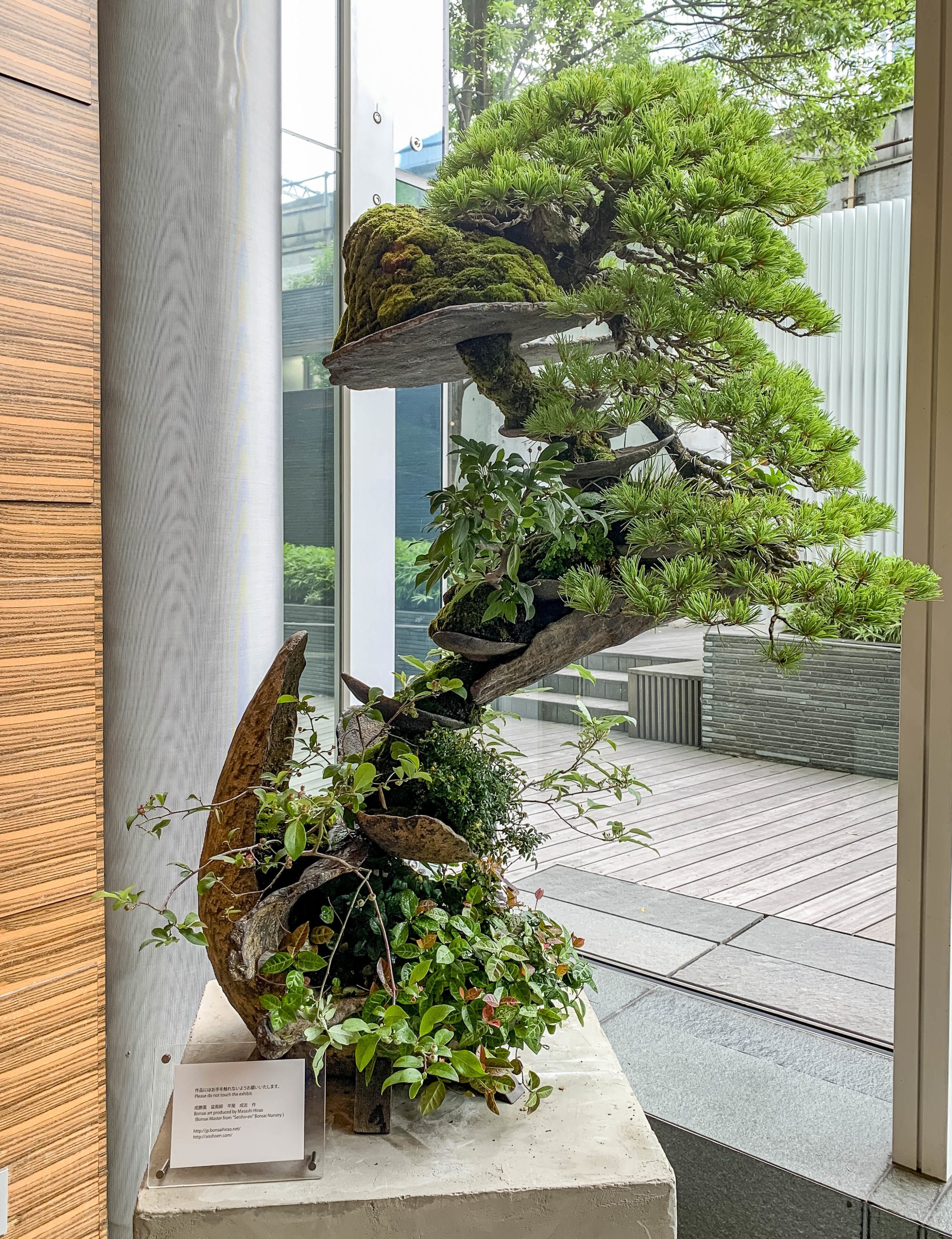 Bonsai art with various plants, stones and wood shapes sits in a corner of the lobby at Four Seasons Hotel Tokyo at Marunouchi.
