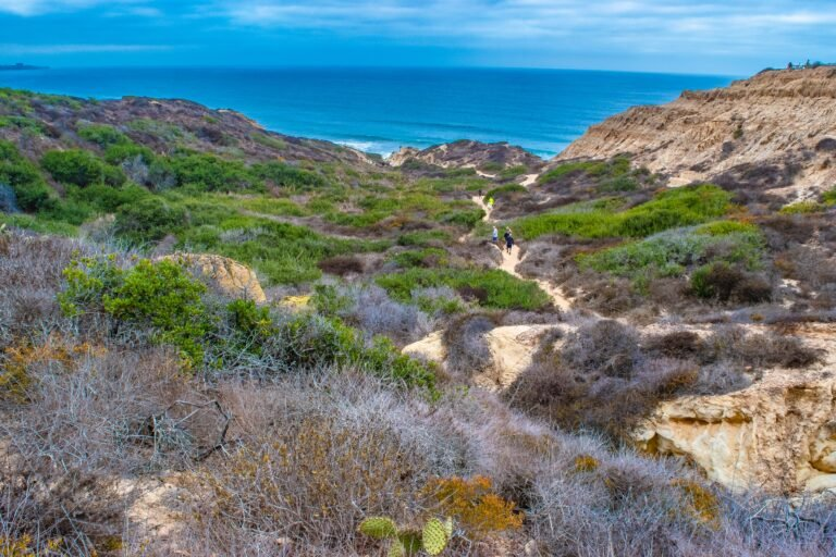 Torrey Pines State Natural Reserve Guide: Hiking Trails and How to Visit