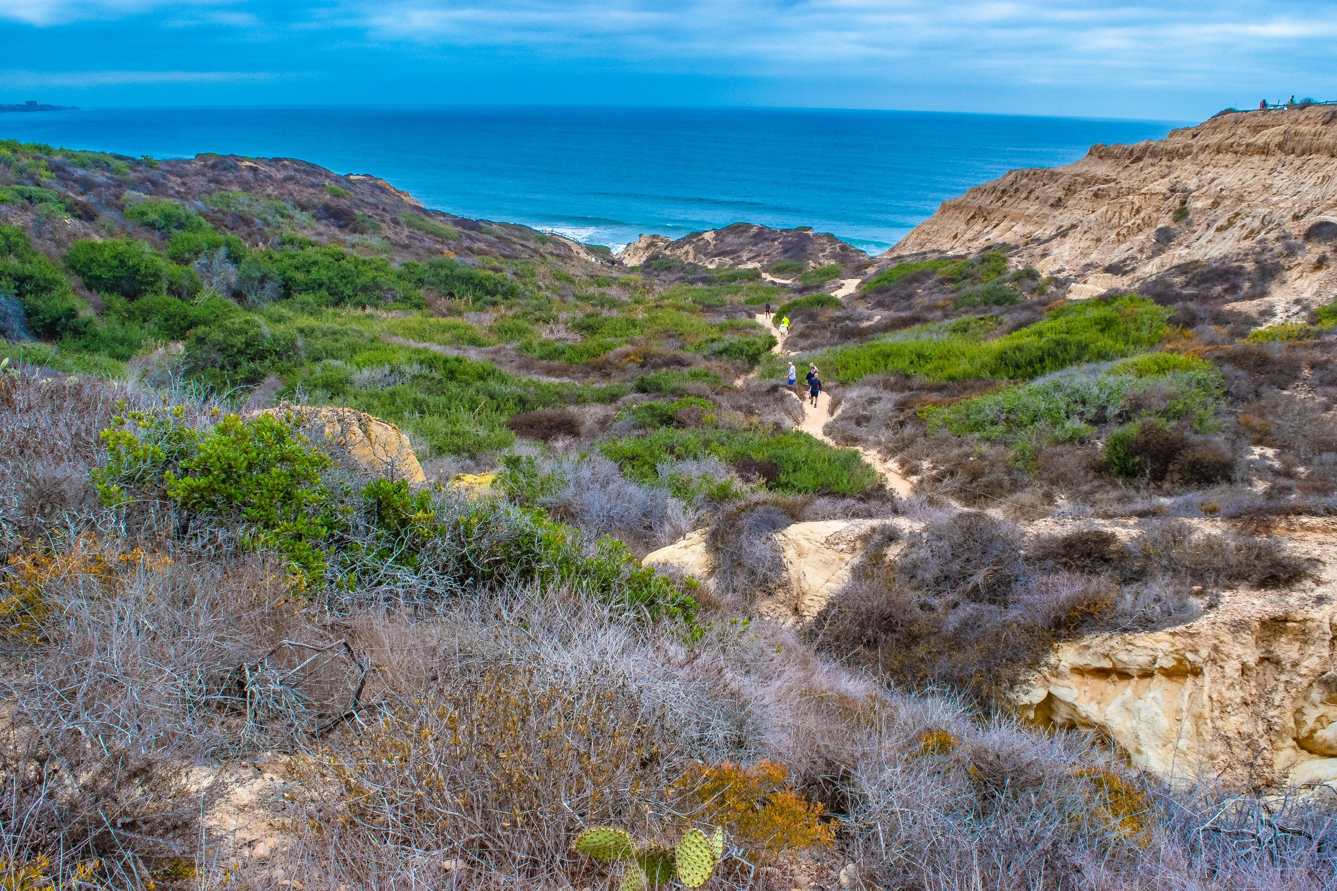 Trails at Torrey Pines Natural Reserve that over look the ocean.