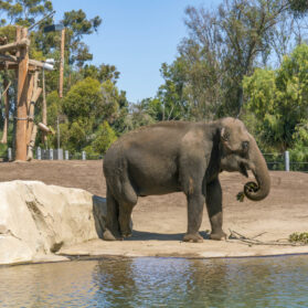 6 San Diego Zoo Tours that Elevate Your Visit