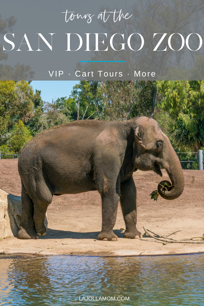 San Diego Zoo tours take guests behind the scenes to keeper-only areas and allow up-close interaction with animals via VIP and other special experiences. And, since many of them are by cart, you can see the Zoo quickly which is important for those with limited time or need to minimize walking.