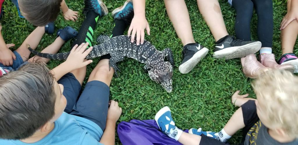 One of the museum's tegus being pet by a group of kids sitting on grass.