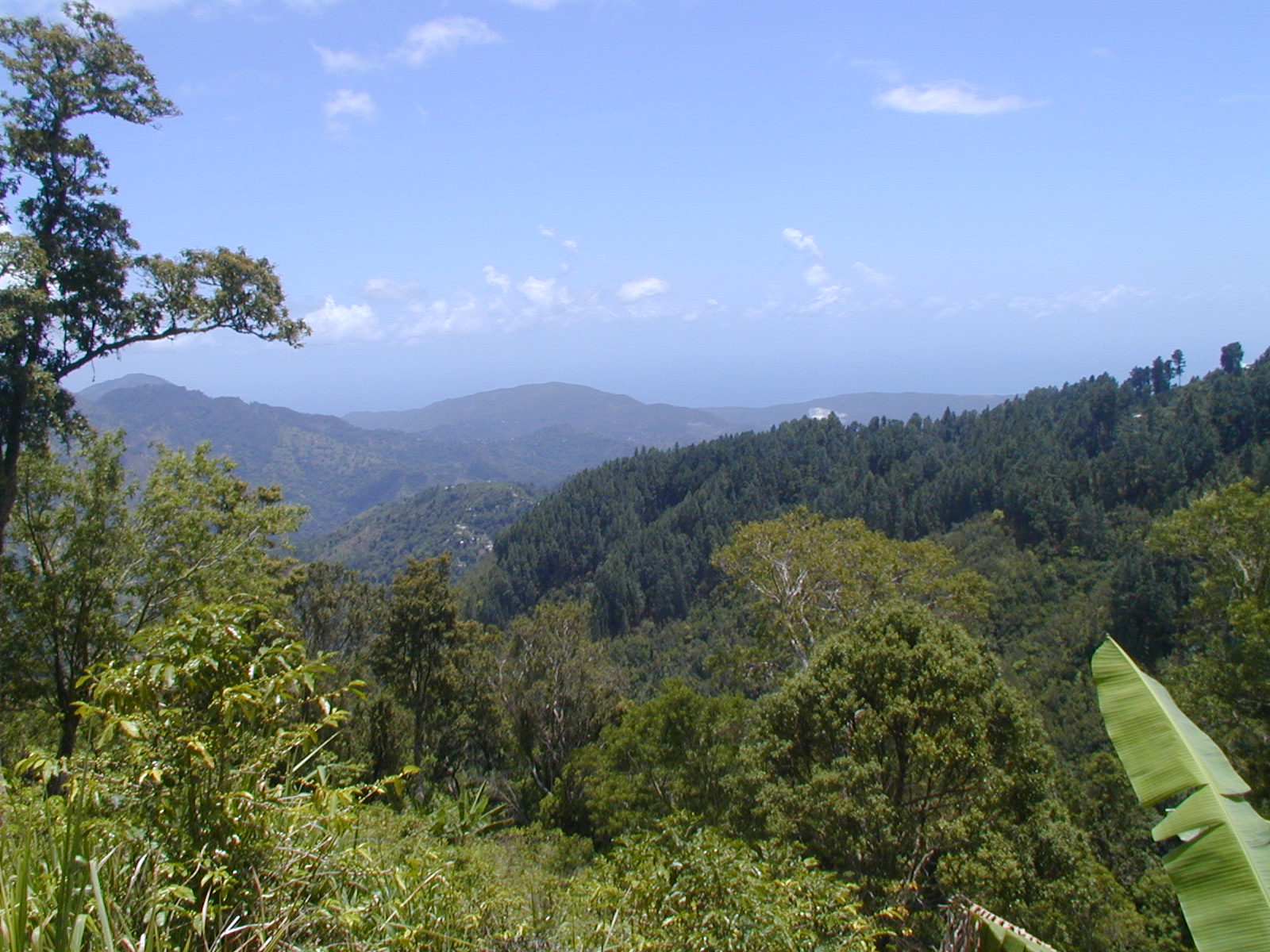 View over the lush green tops of the Blue Mountains in Jamaica.