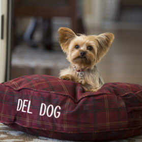 9 Best Dog-Friendly Hotels in San Diego
