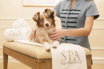 Dog-Friendly Hotels in Los Angeles by Neighborhood