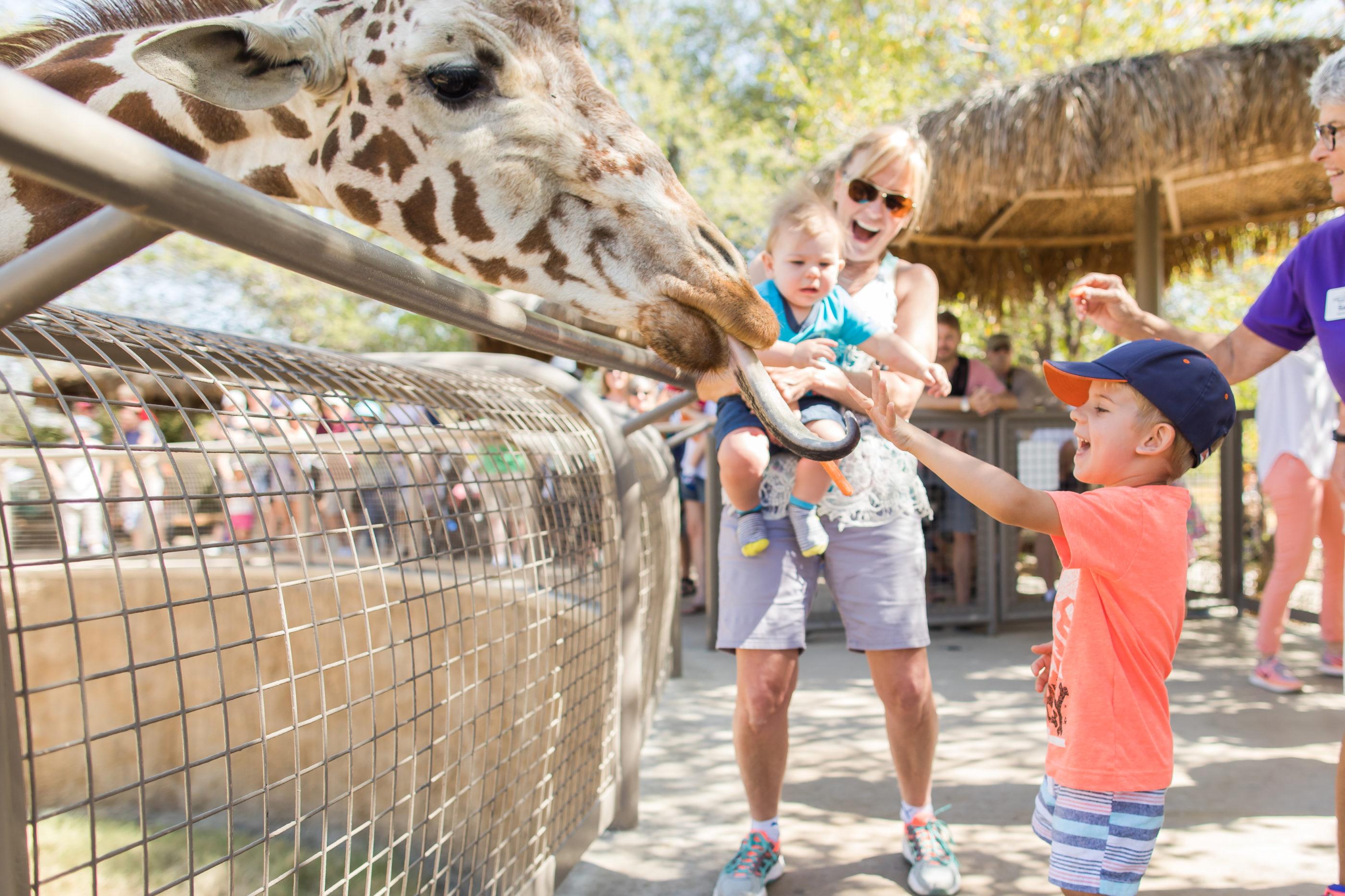 A little boy smiles while feeding a giraffe.