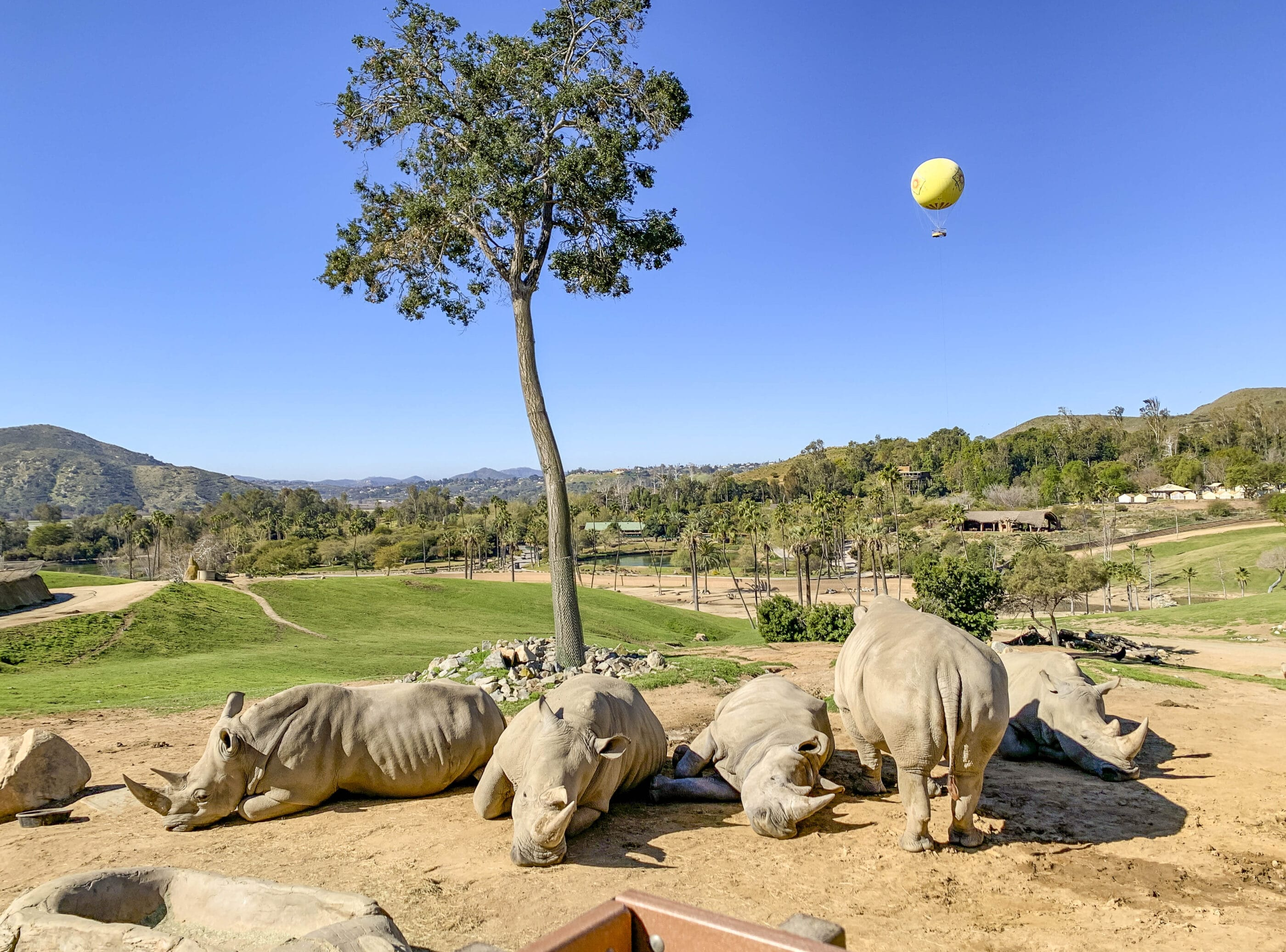 Rhinos that you can see with discount San Diego Zoo Safari Park Discount tickets.