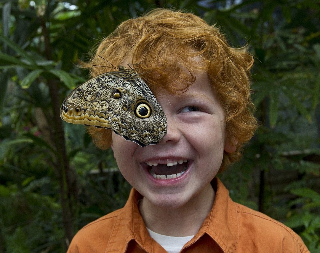 A Giant Owl butterfly lands on a child's head during Butterfly Jungle.