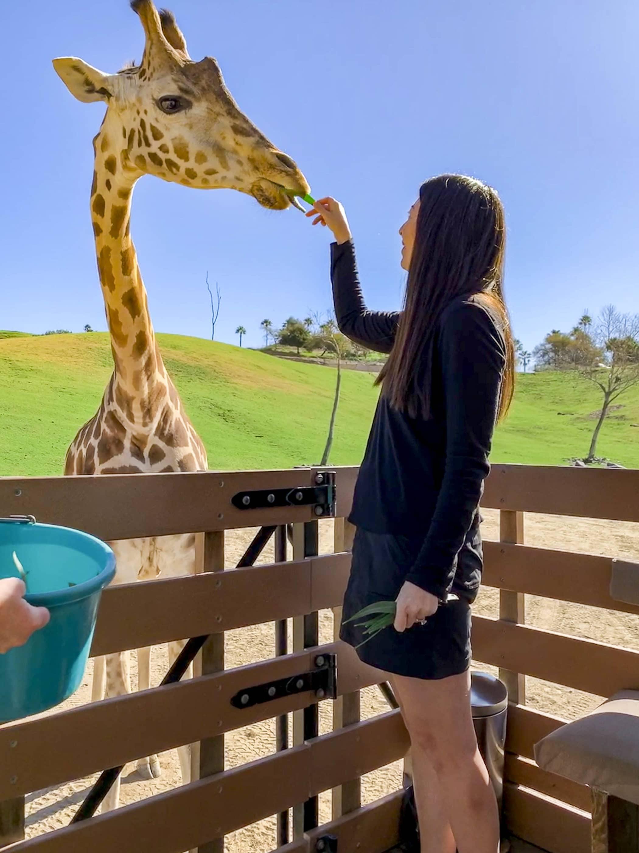 You can feed a giraffe on a Caravan Safari Adventure at San Diego Zoo Safari Park.