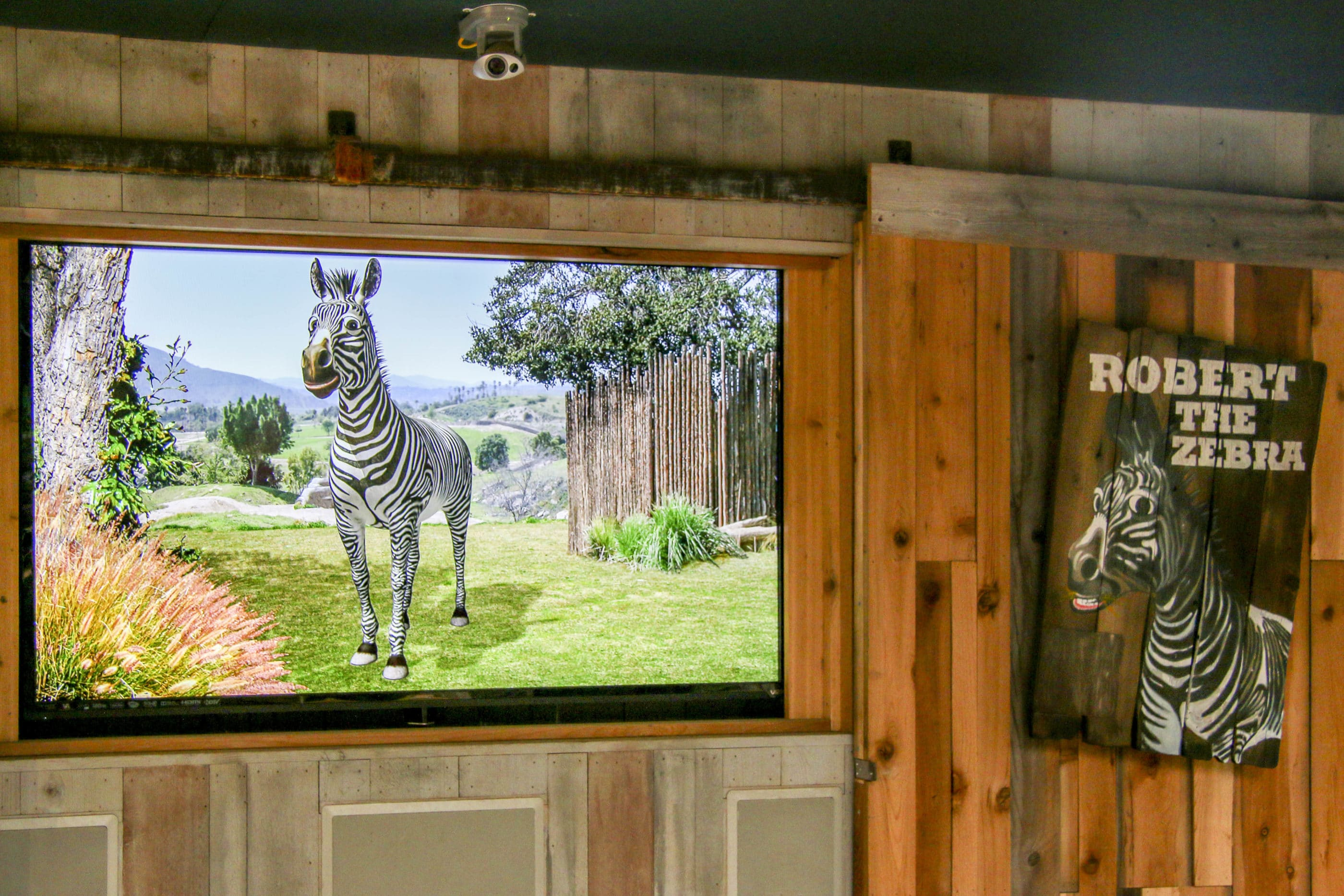 Robert the cartoon zebra on a TV screen is powered by a real human.