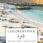 Children's Pool beach and its seals are one of the most popular La Jolla attractions. Learn why we have it, where to park, and what you can do there.