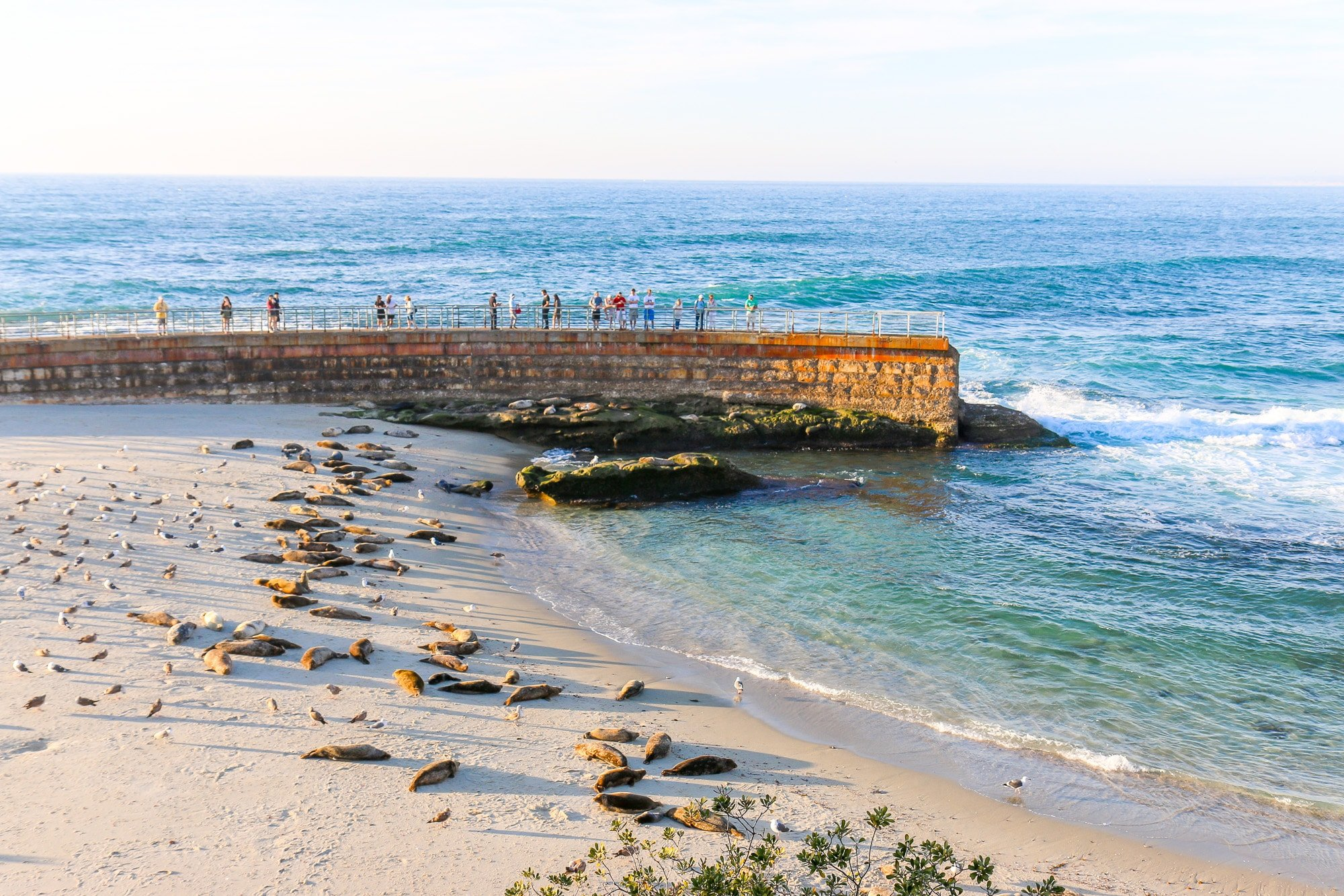 View of the seawall and harbor seals at Children's Pool beach in La Jolla