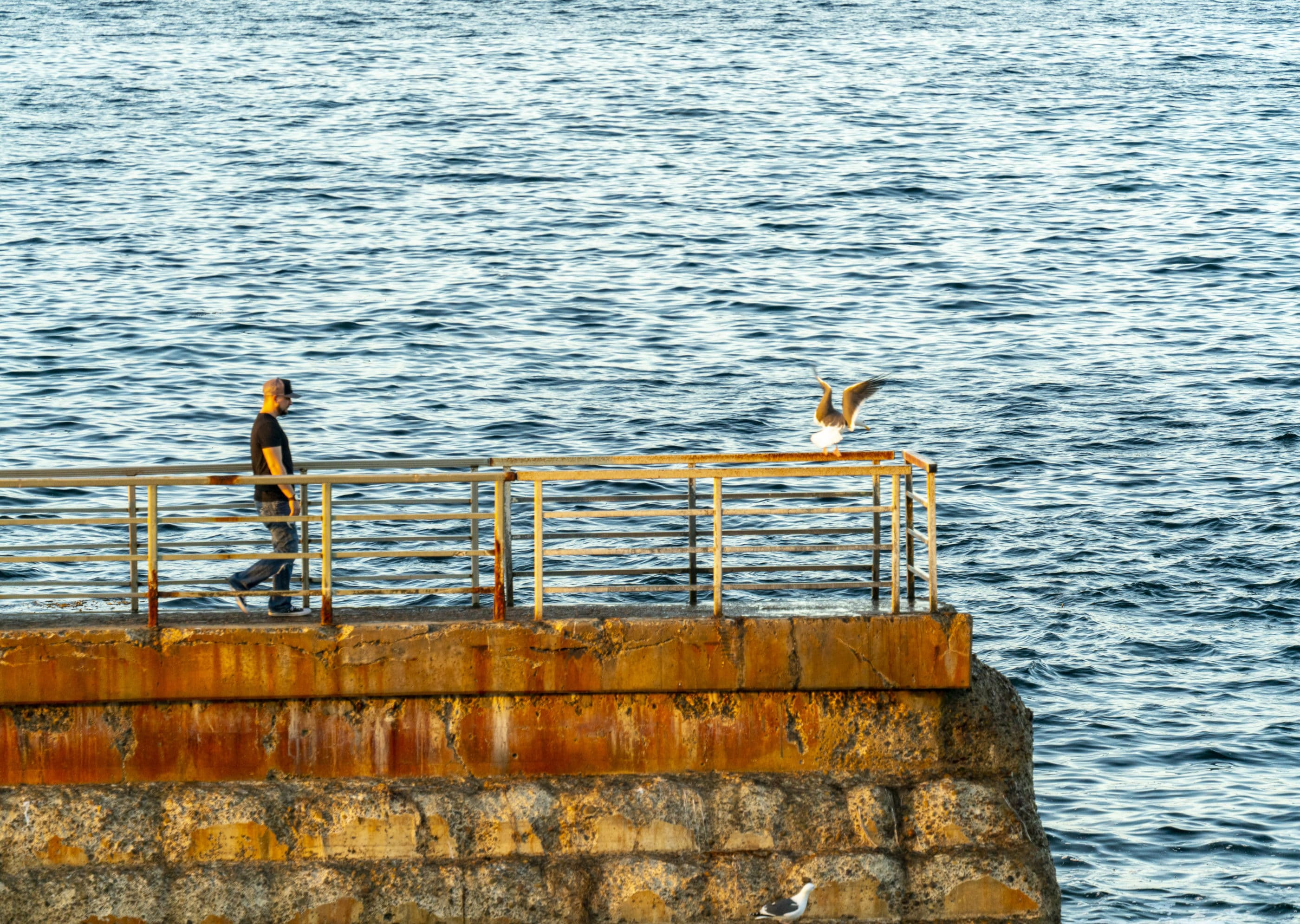 A man walks on the Children's Pool seawall with the ocean in the background.