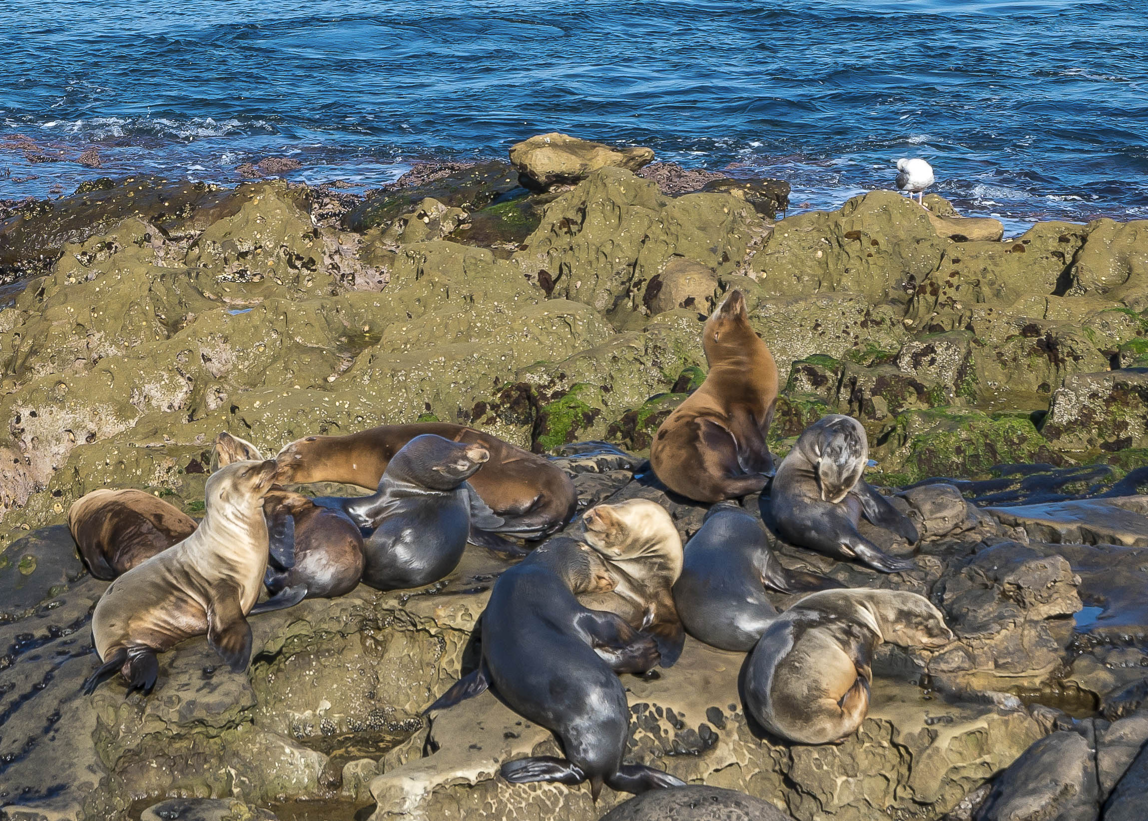 Sea lions huddle up on the rocks at La Jolla Cove, one of my favorite animal encounters in San Diego.