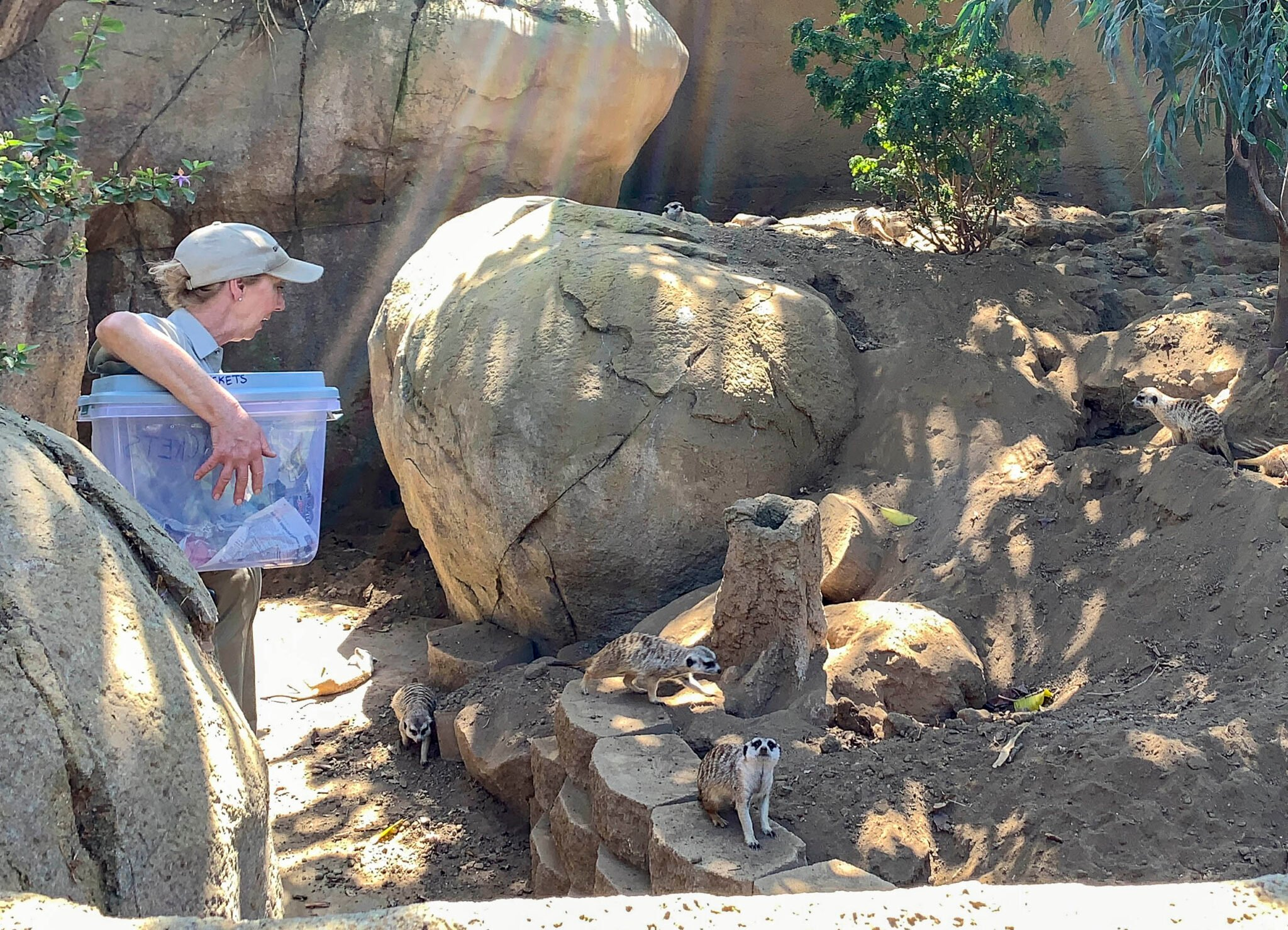 A meerkat keeper at San Diego Zoo holds a tub of food and answers questions about their care.