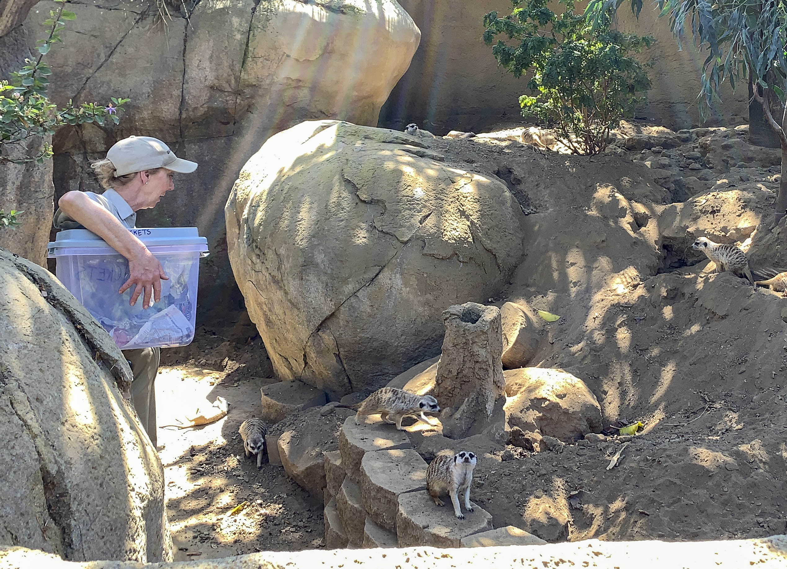 A keeper tells guests about meerkats during a daily Keeper Talk.