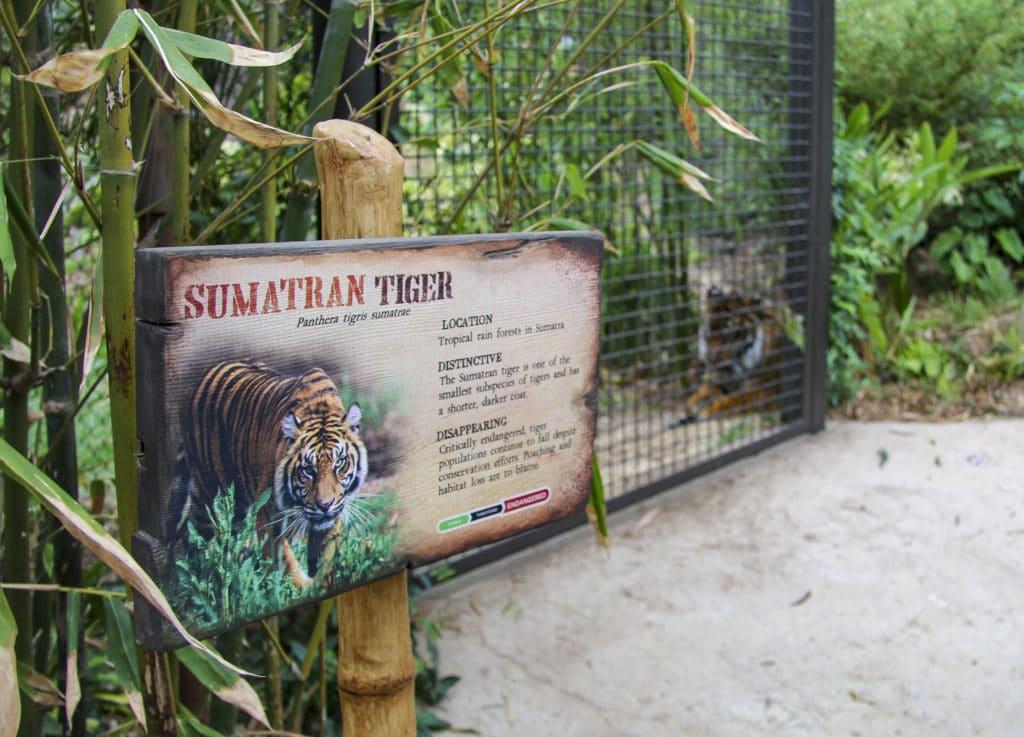 This image has an empty alt attribute; its file name is san-diego-zoo-safari-park-sumatran-tiger-sign-1024x737.jpg