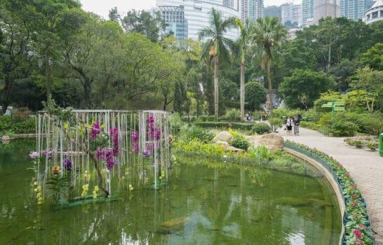 15 Fun Things to Do in Hong Kong Park
