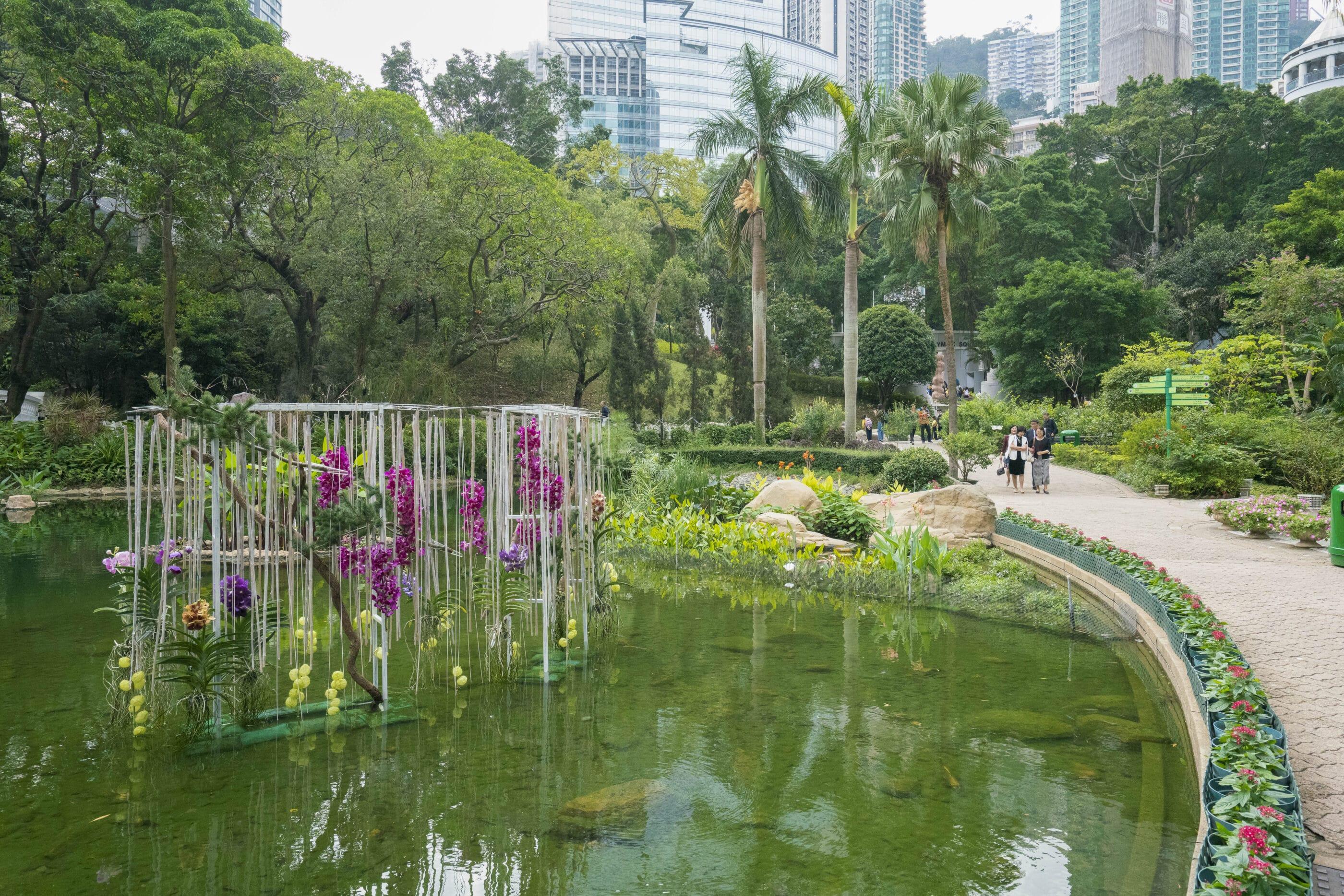 Orchids display in the Hong Kong Park lake.