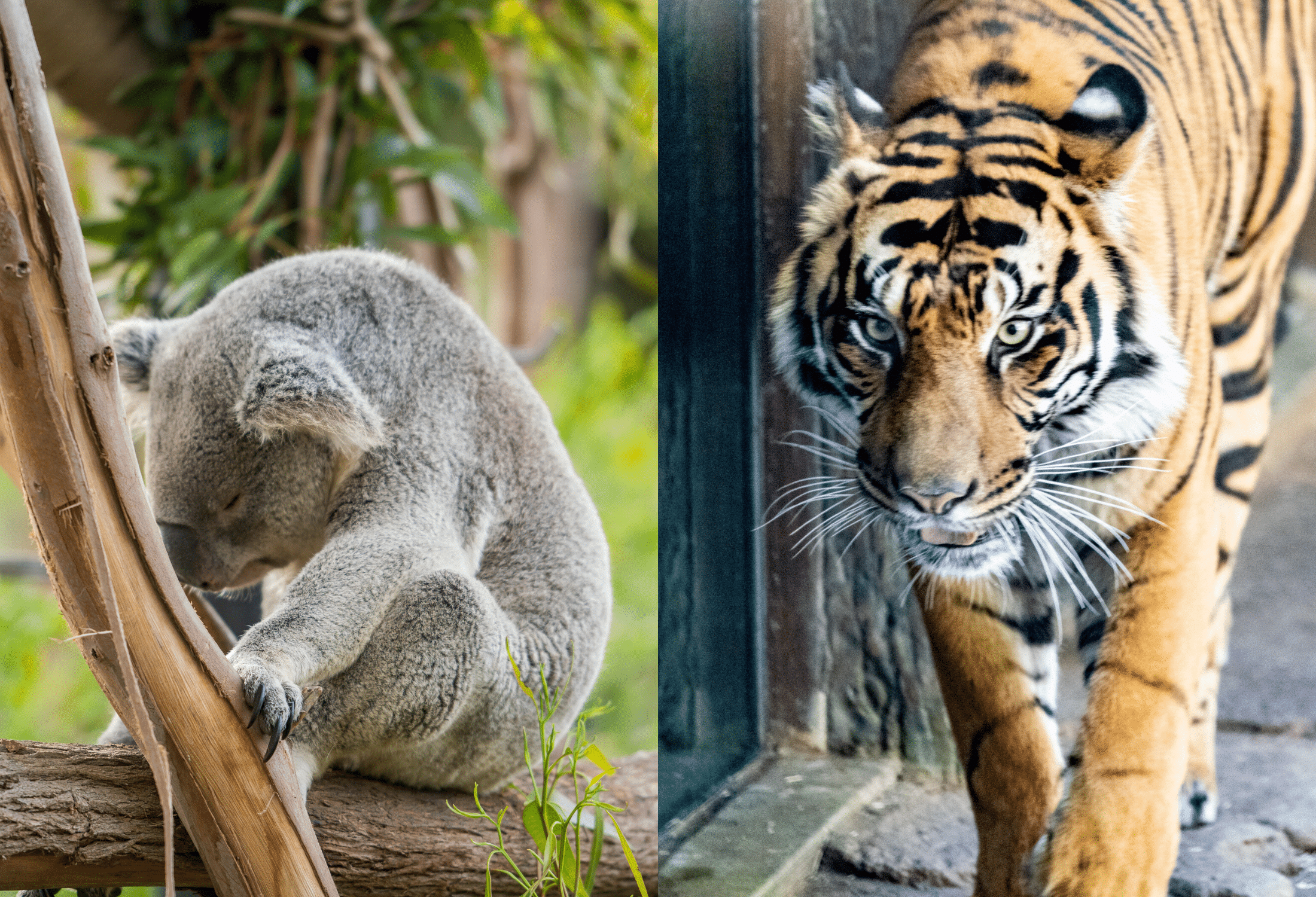 Visiting The San Diego Zoo What To Know Before You Go La Jolla Mom