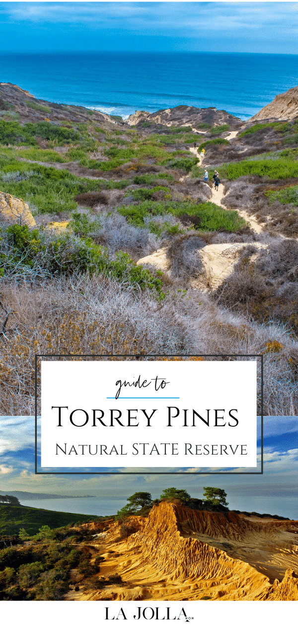 Guide to Torrey Pines State Natural Reserve including hiking trails, wildlife, parking, directions, rules, beach and more for your visit to this San Diego County gem.