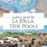 We're regular visitors to the La Jolla tide pools. I share everything to know from directions to visible sea life with tips from a Birch Aquarium expert.