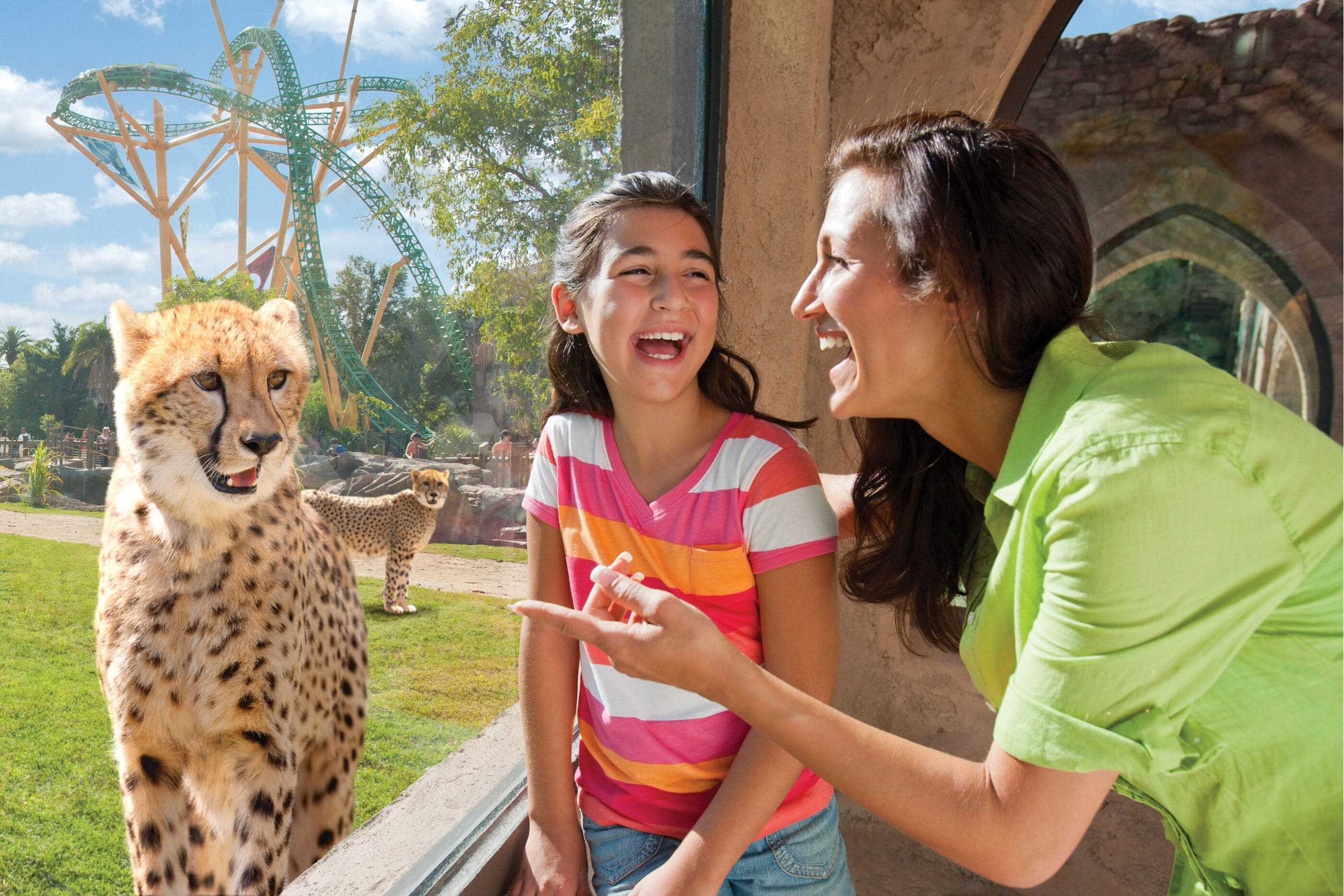 An adult and girl look at a cheetah through glass at Busch Gardens Tampa Bay.