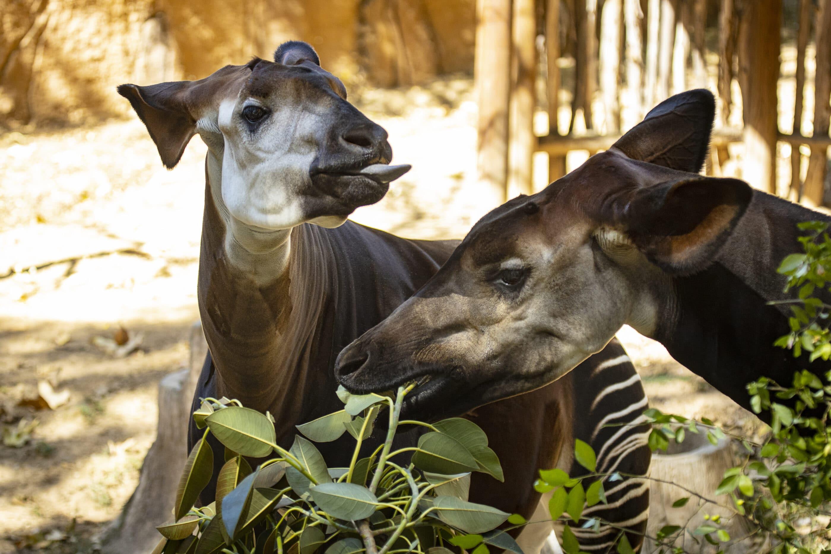 San Diego Zoo Admission Ticket Klook Us