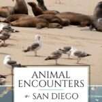 These animal encounters in San Diego, California include naturally occurring experiences, visits to wildlife sanctuaries, & interactions at top attractions.