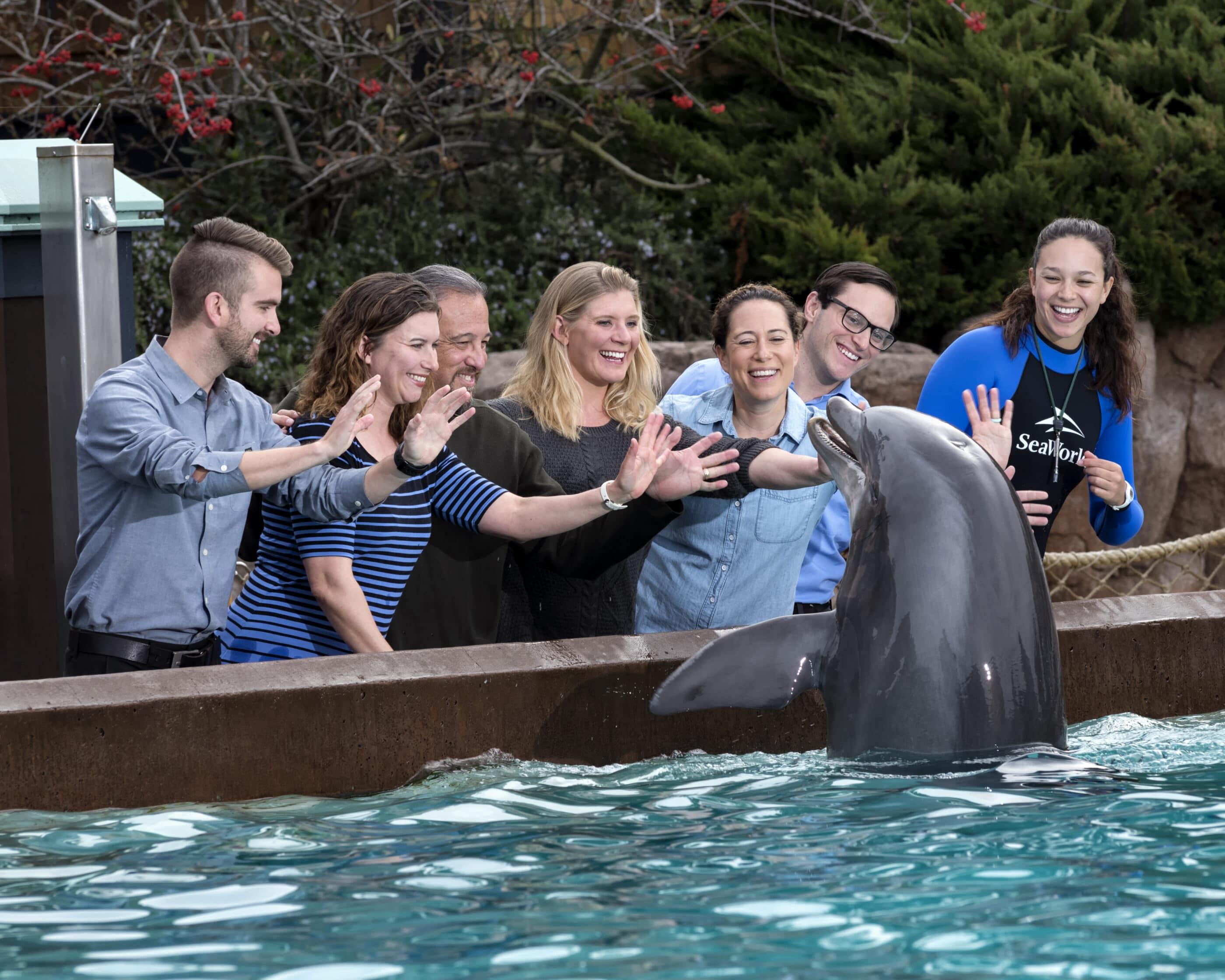 A dolphin greets waving guests at SeaWorld San Diego.