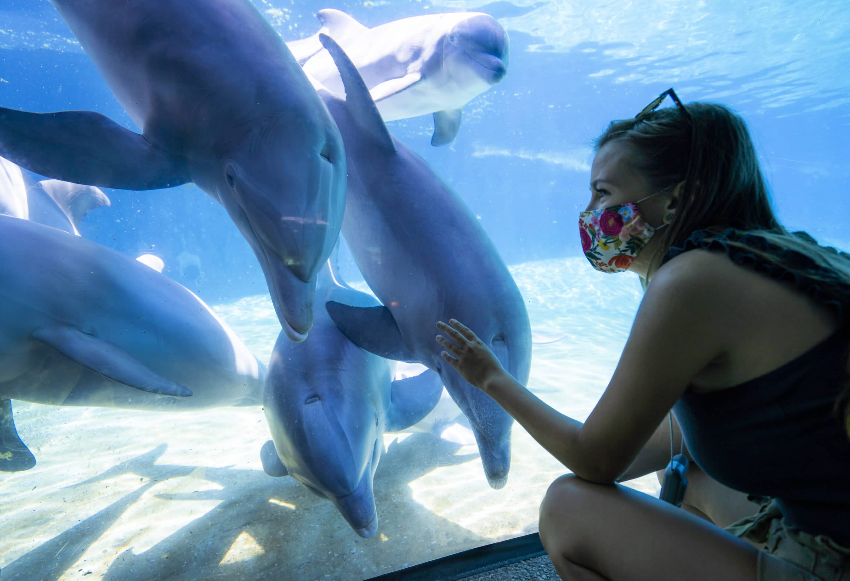 A woman wearing a face mask views dolphins through a window in an outdoor exhibit at SeaWorld San Diego.