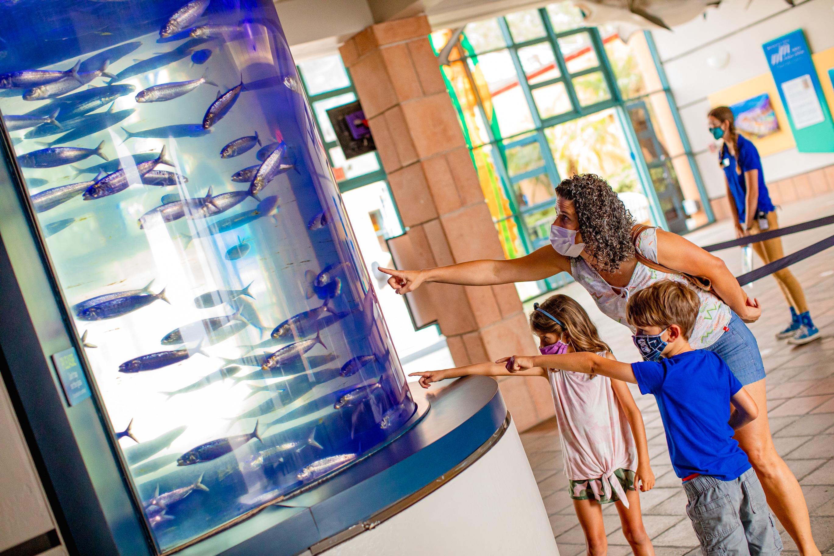 A family wearing masks enjoys a fish tank at Birch Aquarium.