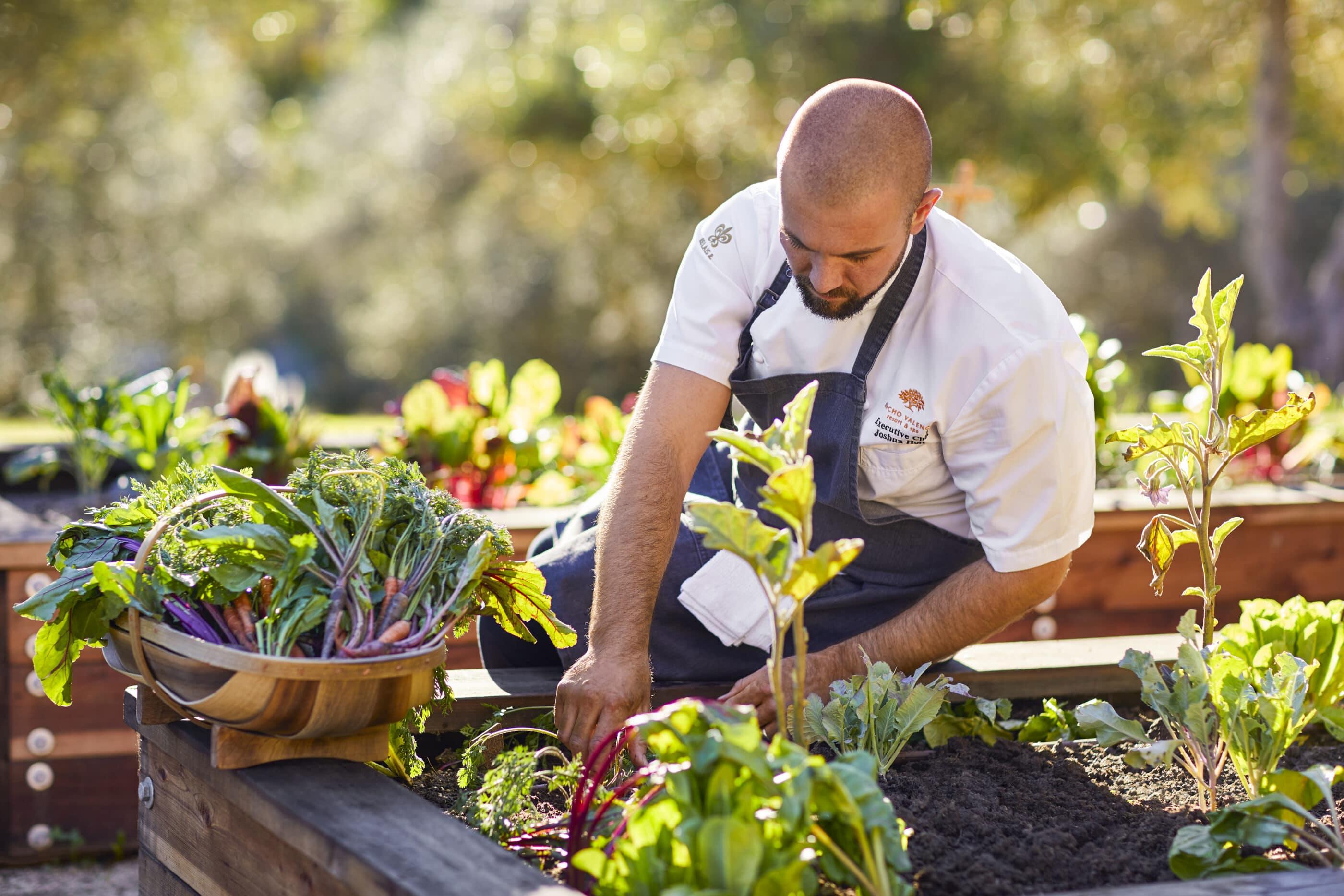 Chef Joshua picks greens in the resort garden.