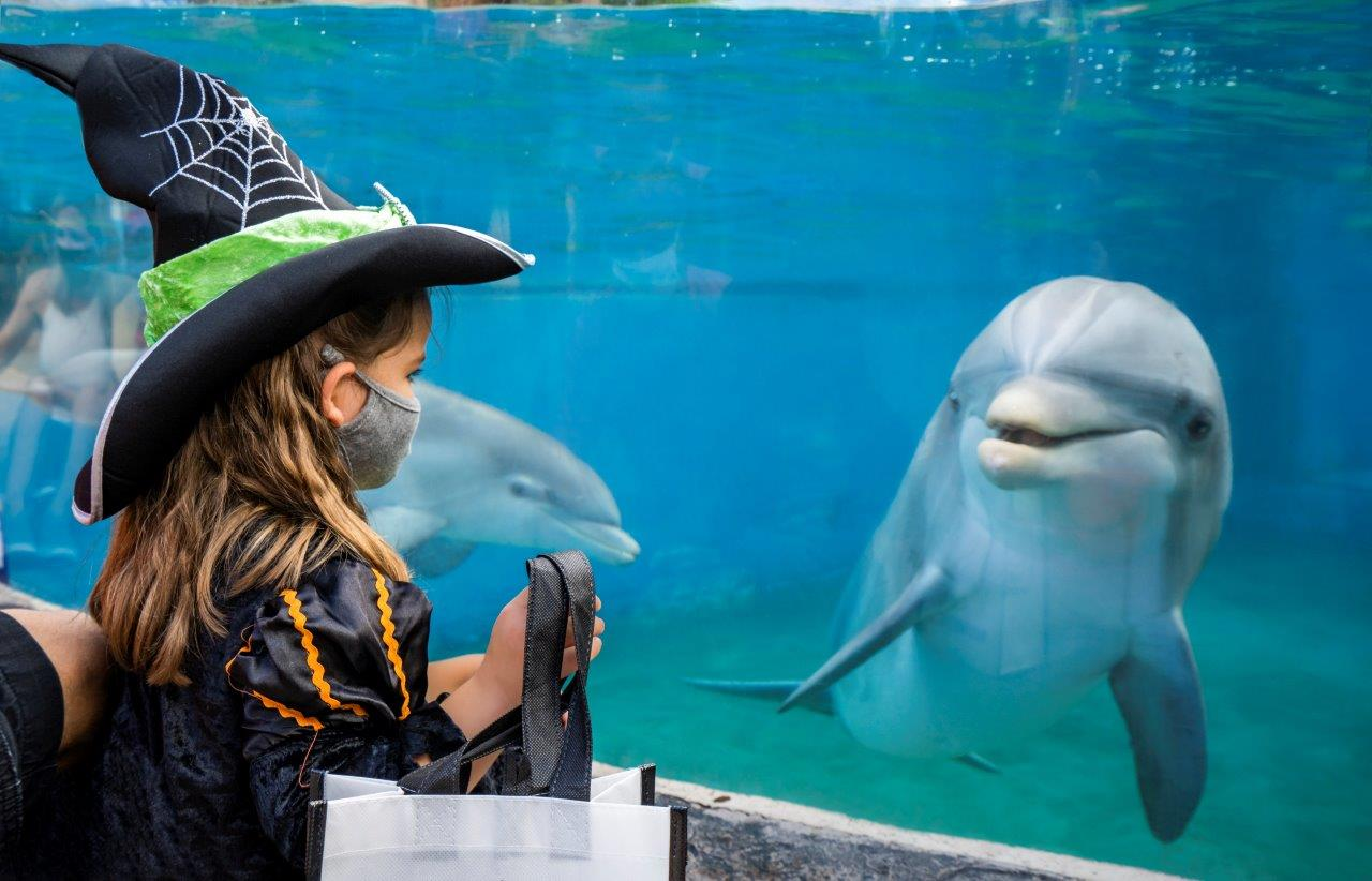 A little girl in a witch costume wearing a mask views a dolphin through glass at SeaWorld San Diego Spooktacular