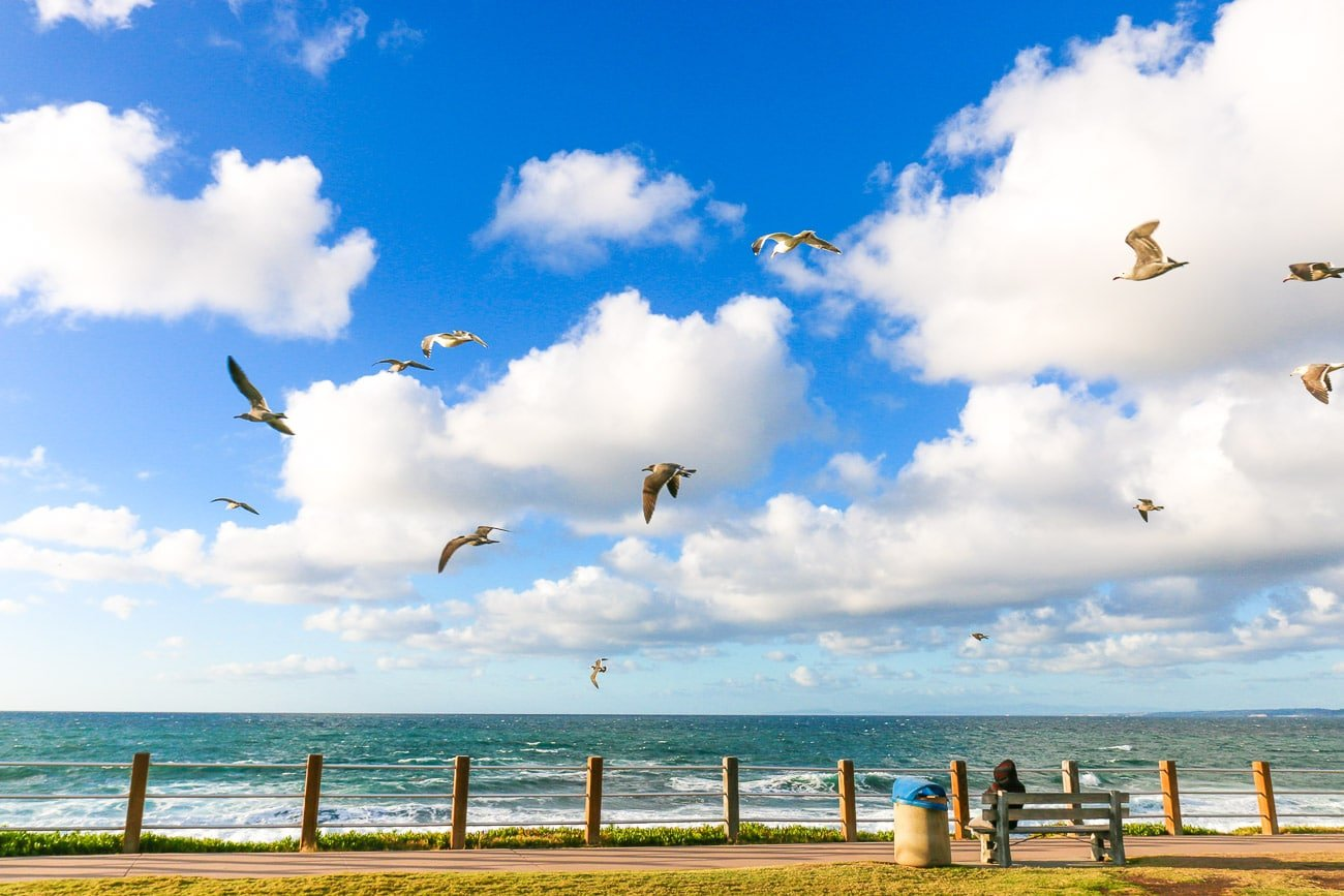 Birds fly over the boardwalk at La Jolla Cove.