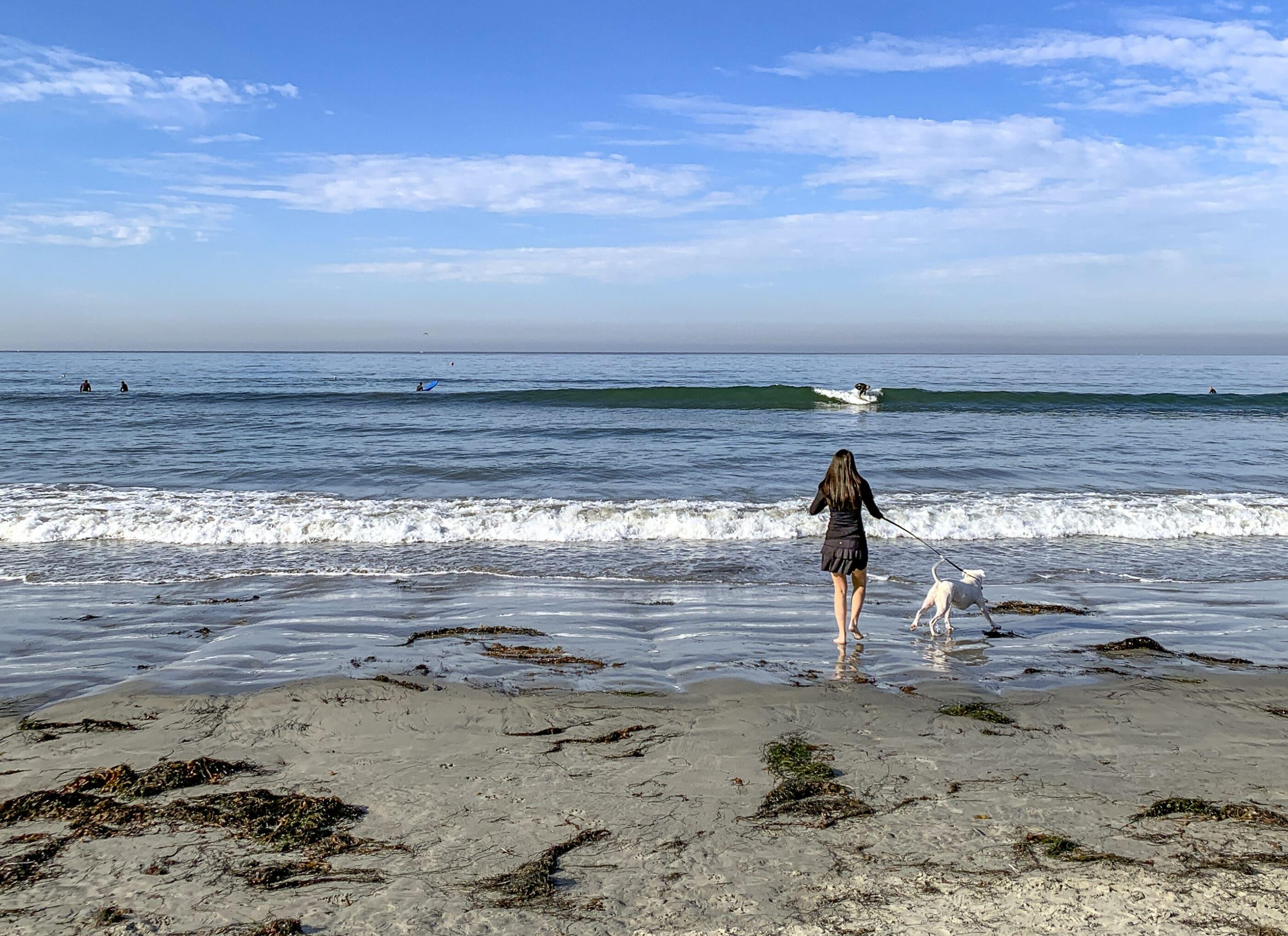 My dog runs on a leash toward the ocean at Law Street Beach in Pacific Beach.