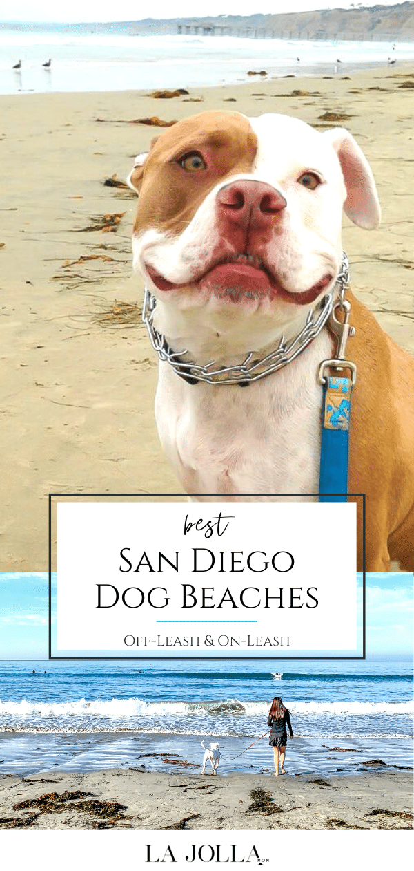 A local's guide to dog-friendly beaches in San Diego County. Where to go (legally) for on-leash and off-leash fun, rules, and more tips.