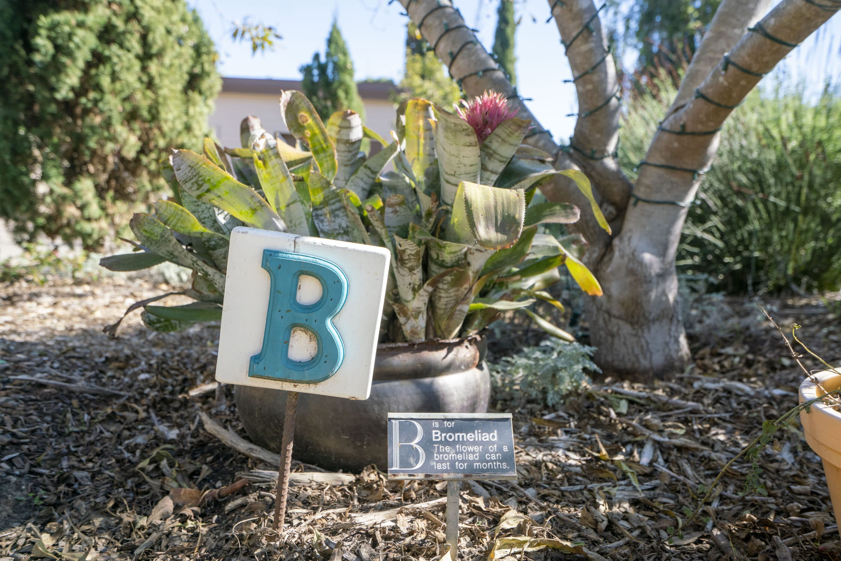 """A bromeliad with a """"B"""" sign in the Hamilton Children's Garden."""