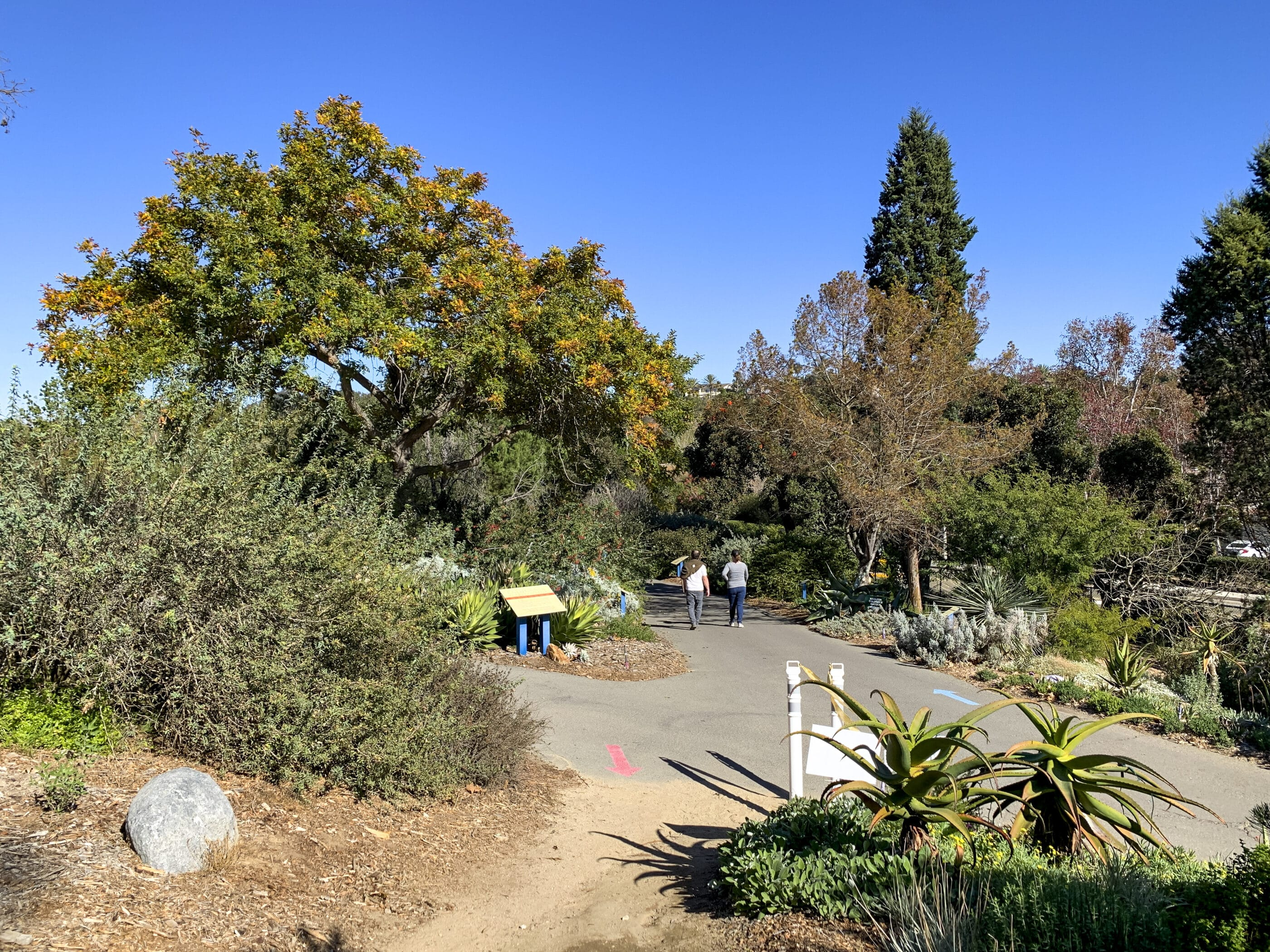 People walk along a paved path at San Diego Botanic Garden under blue skies and sunshine in December.