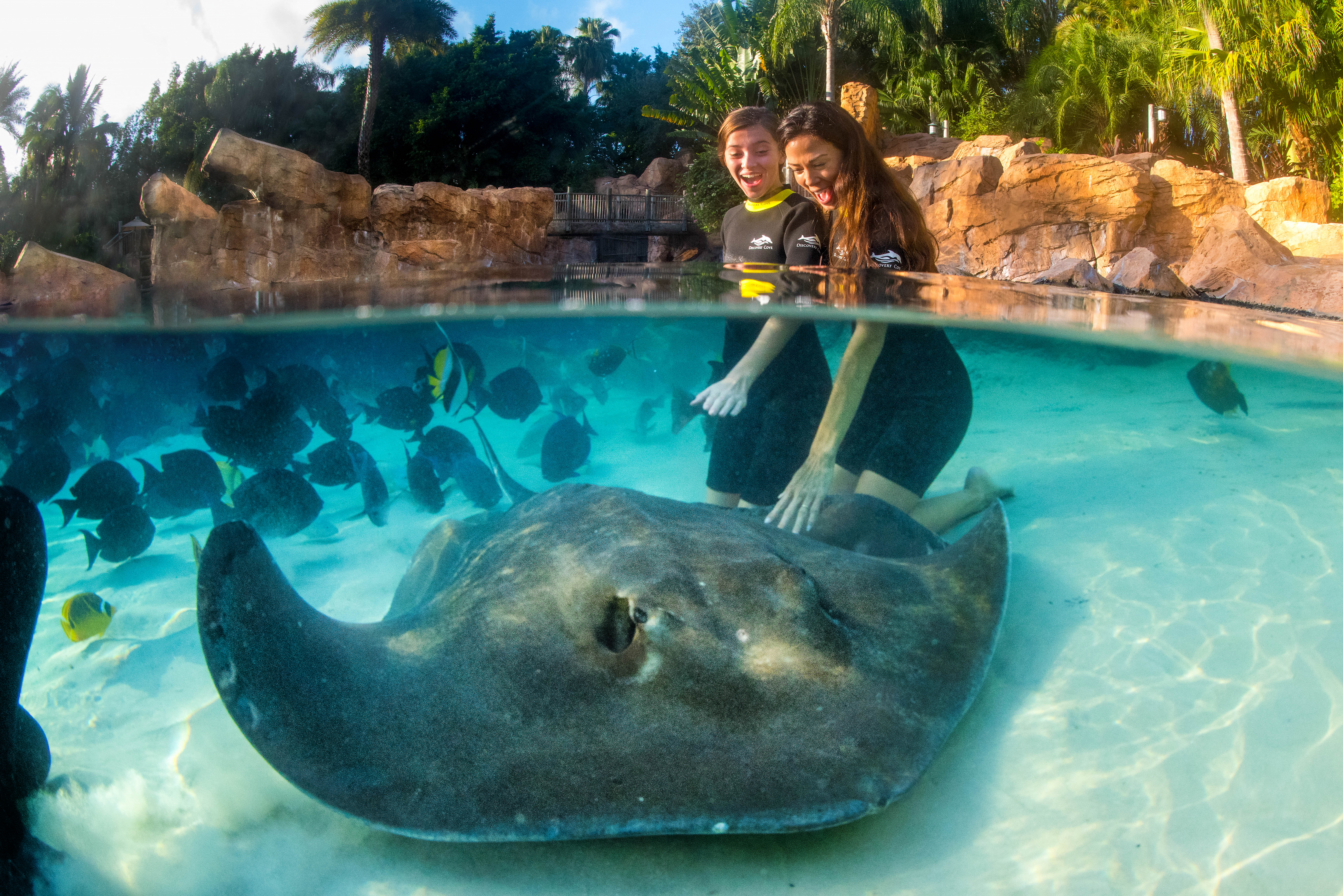 Guests touch a ray underwater in the Grand Reef.