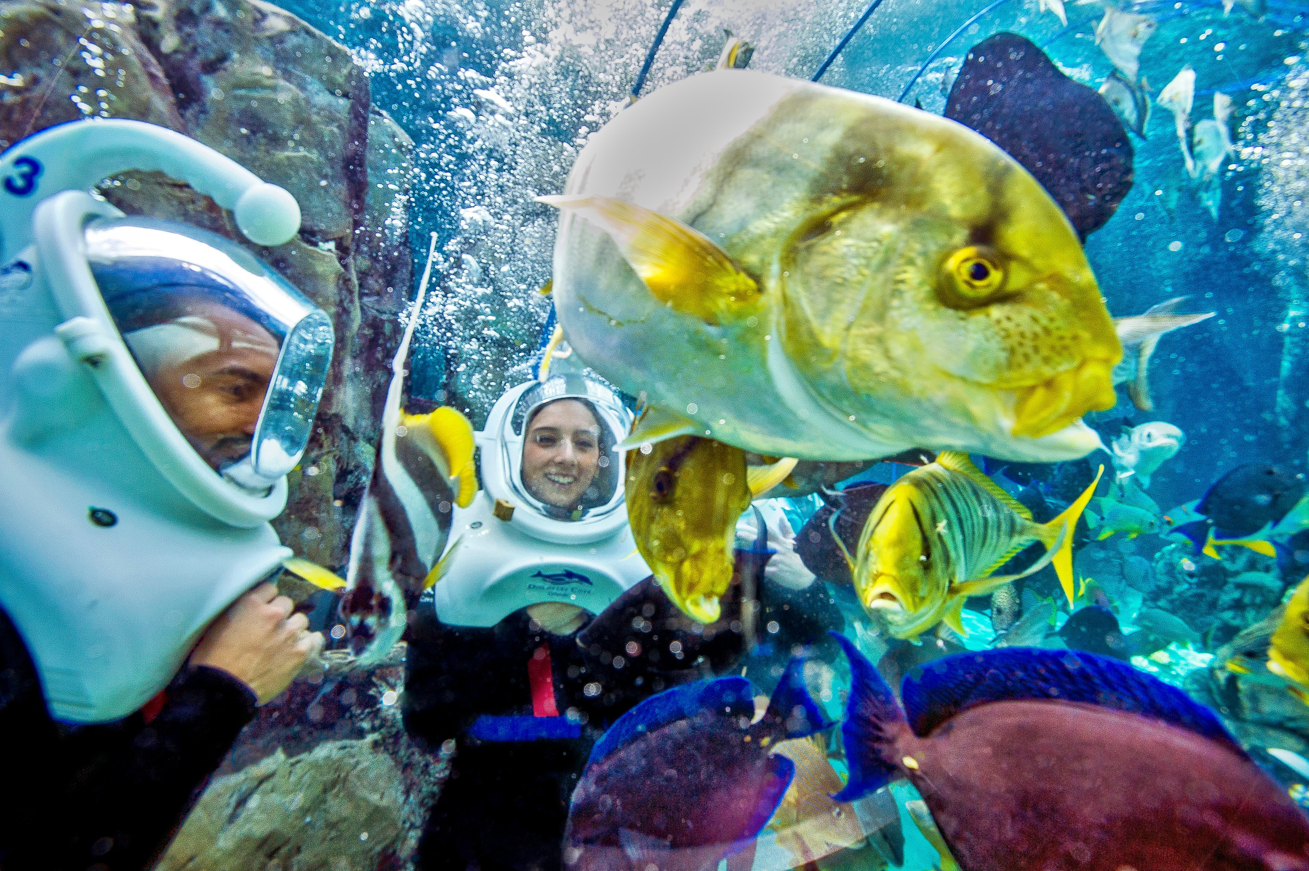 Guests with dive helmets look at fish underwater during the SeaVenture experience.