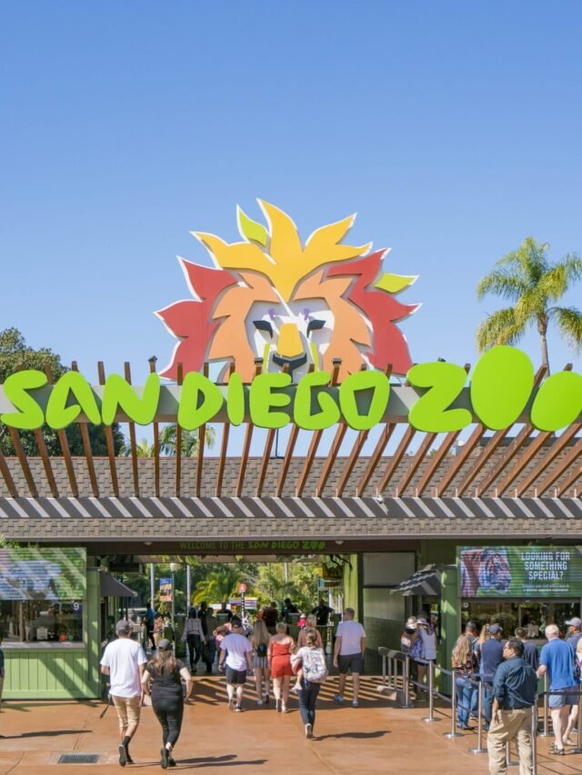 10 Tips for Visiting the San Diego Zoo Story