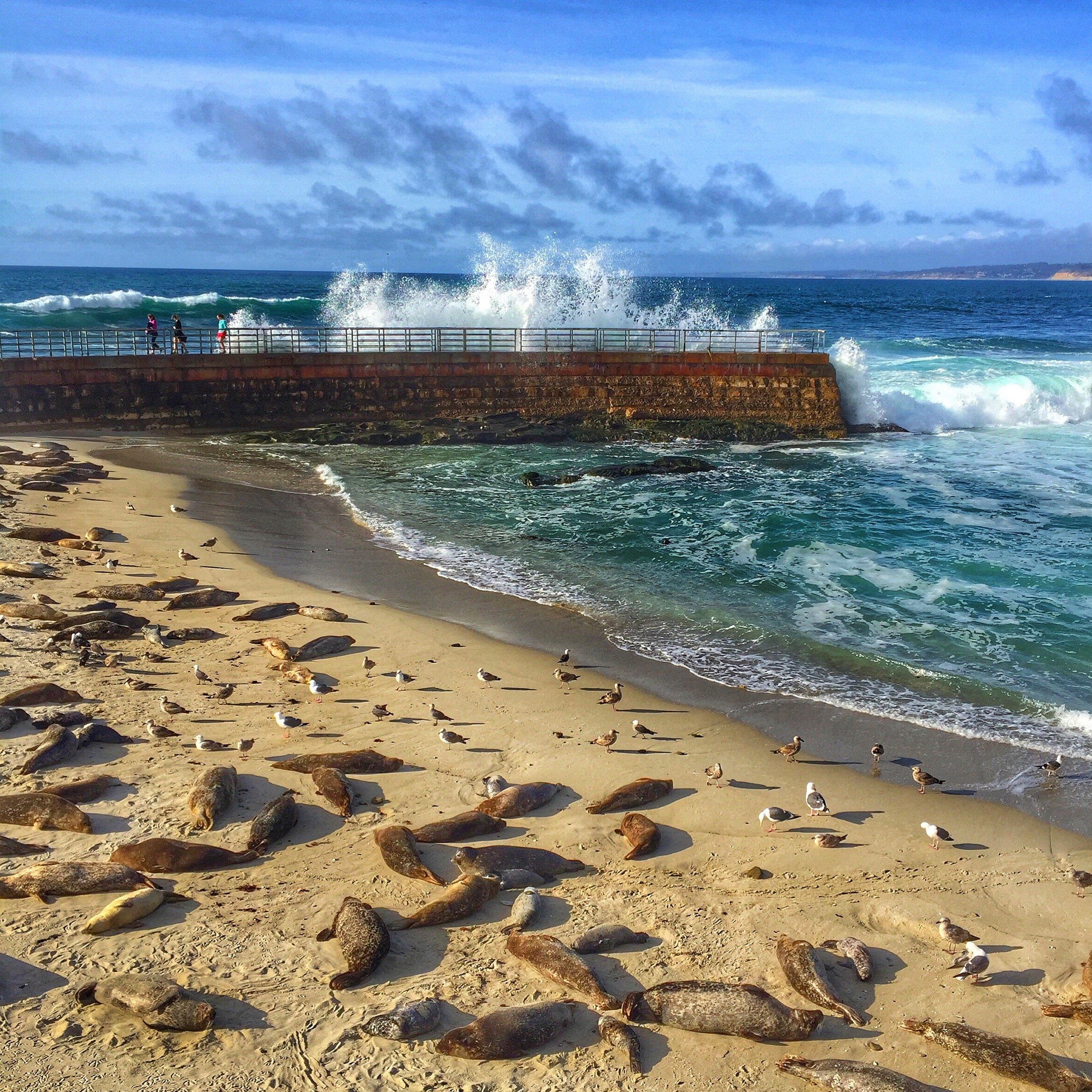 A wave crashes on the Children's Pool sea wall while seals sleep on the sand.
