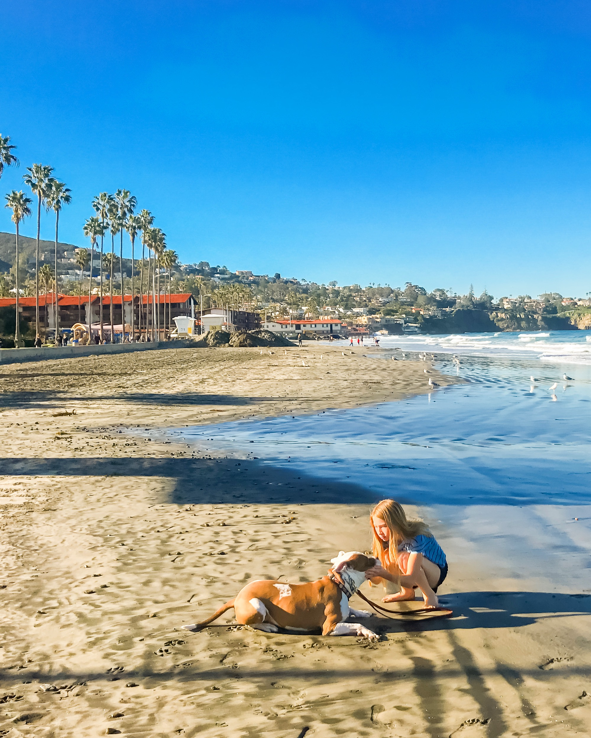 My daughter pets our dog on La Jolla Shores Beach.