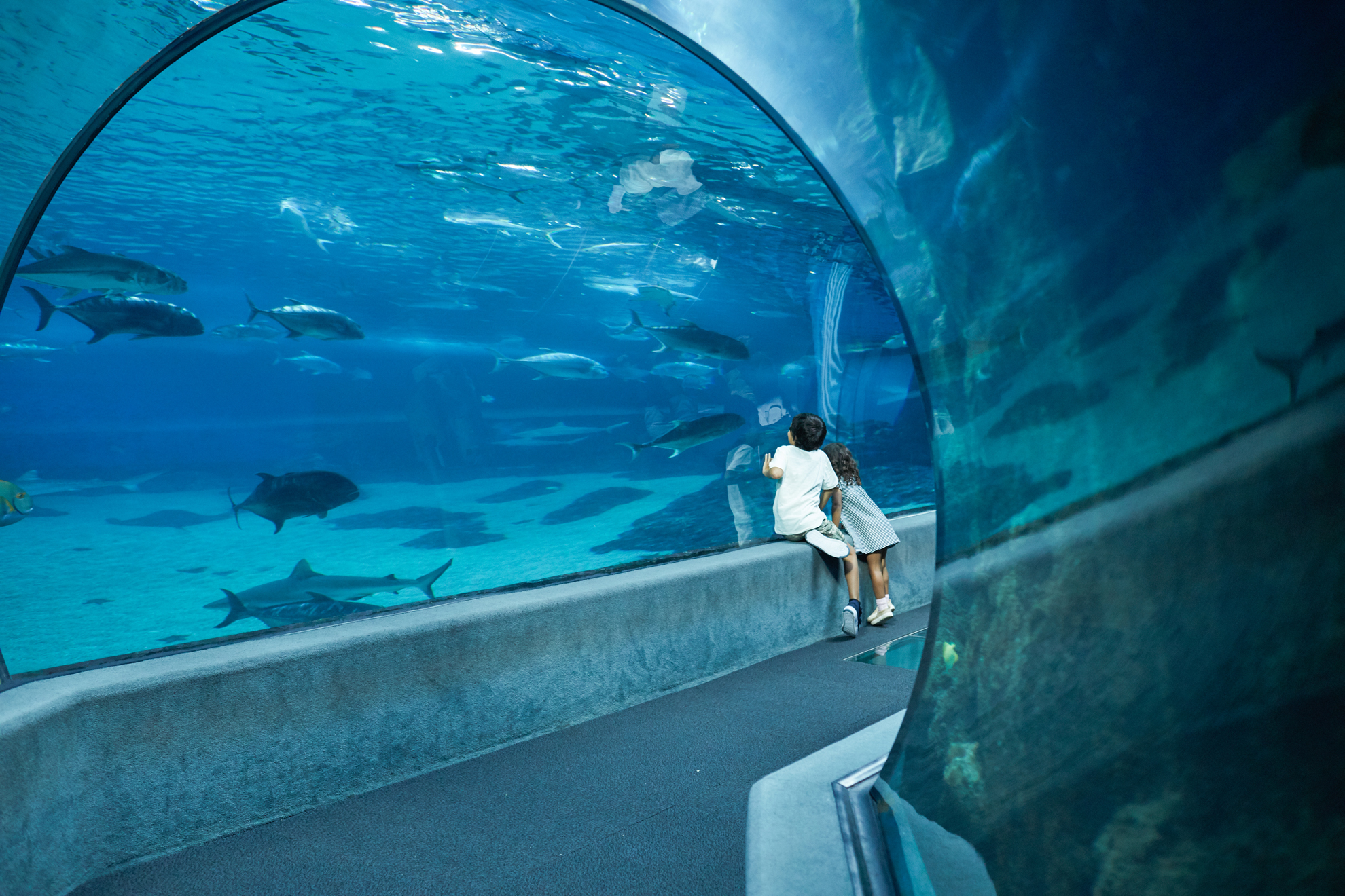Two young kids look at fish through the glass tunnel wall at Maui Ocean Center.