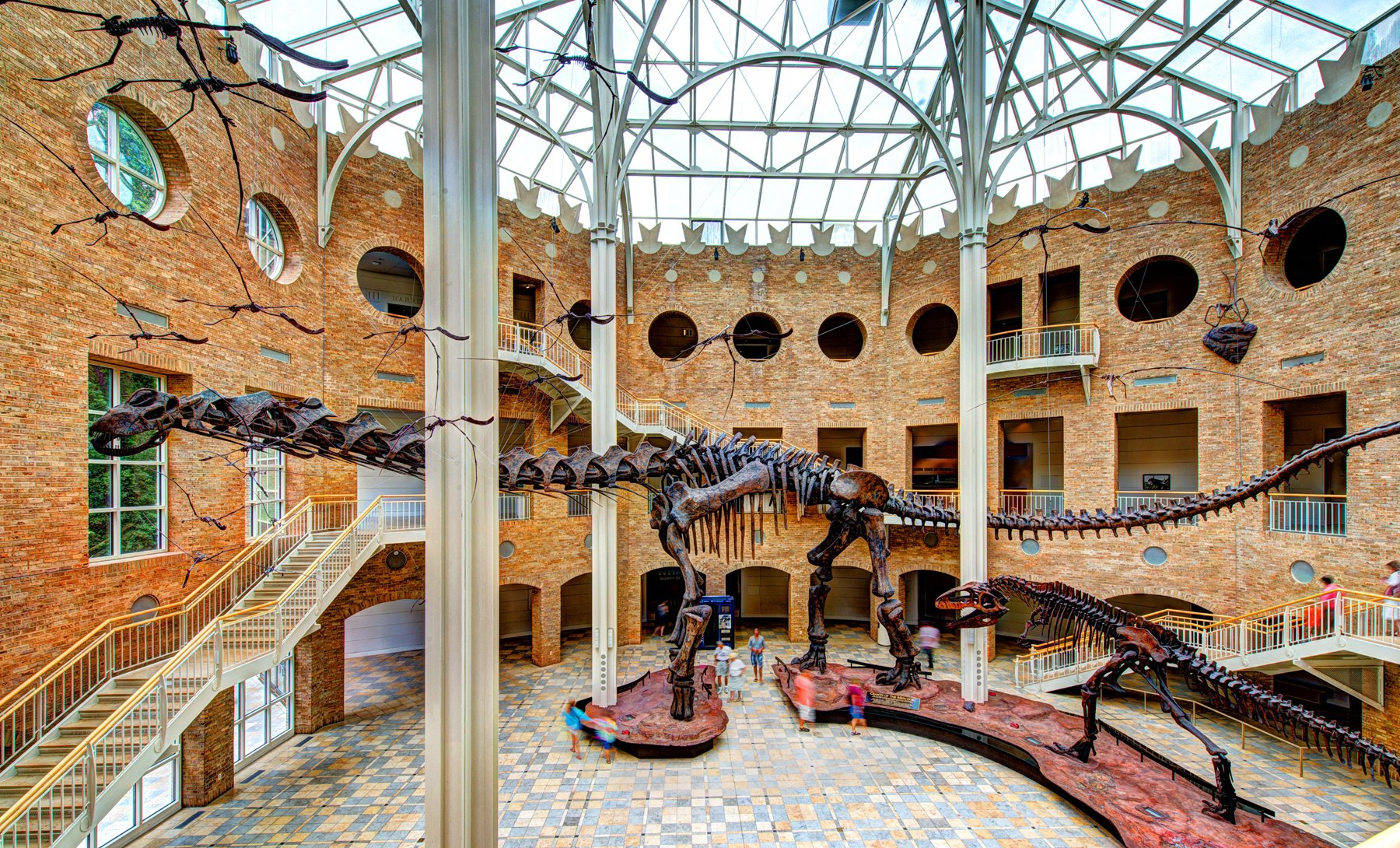 Giganotosaurus and Argentinosaurus Dinosaur sculptures in the main room at the Fernbank Museum of Natural History.