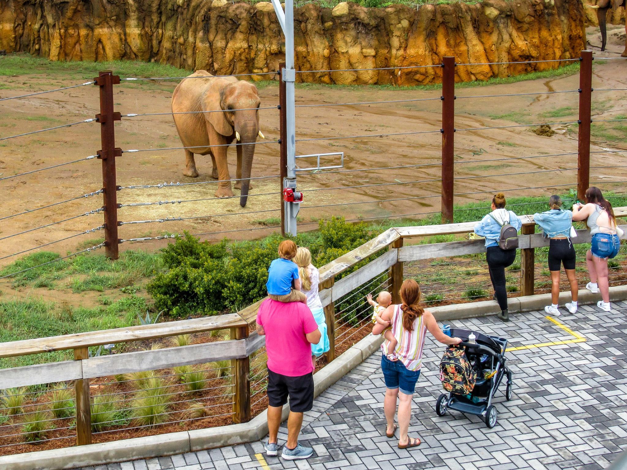 Families look at an elephant in its enclosure at Zoo Atlanta.