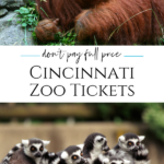 These are the most popular ways to find discounted prices on Cincinnati Zoo tickets through authorized sellers to visit for less.