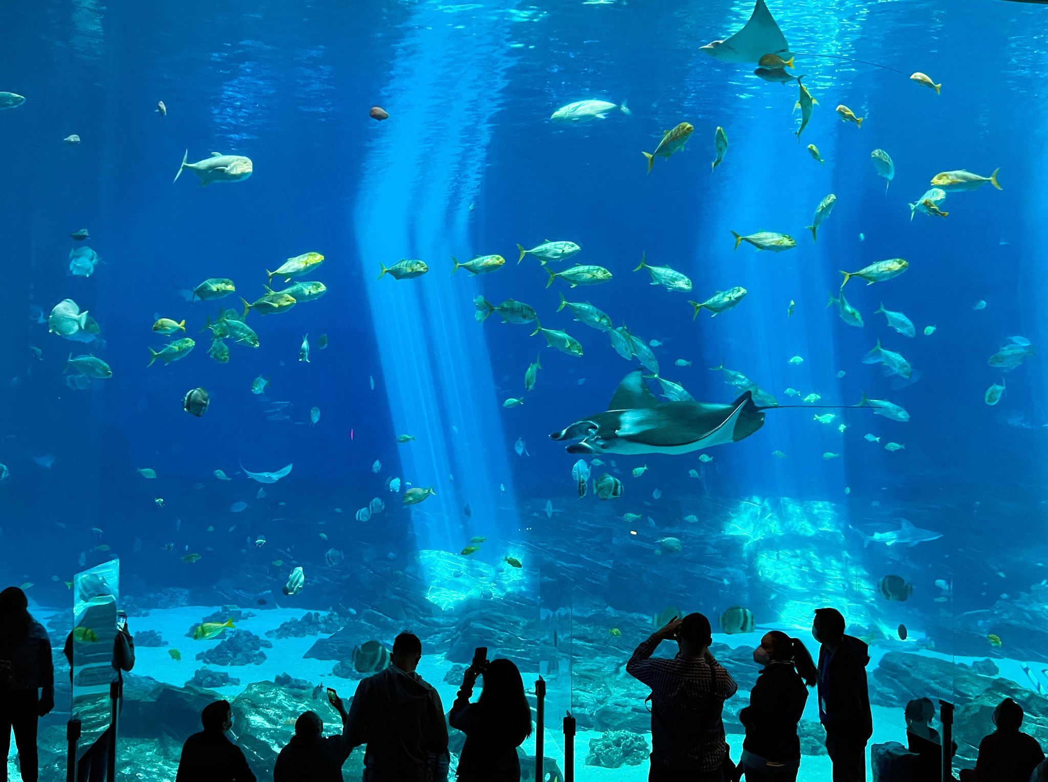 Guests take photos of rays and fish in a big tank at Georgia Aquarum.