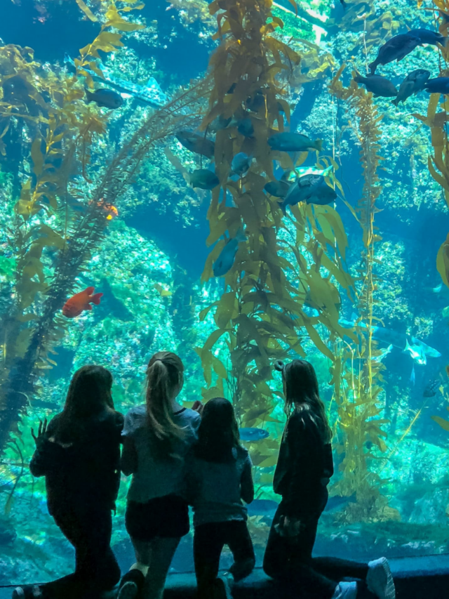 Best Things to Do in San Diego Story